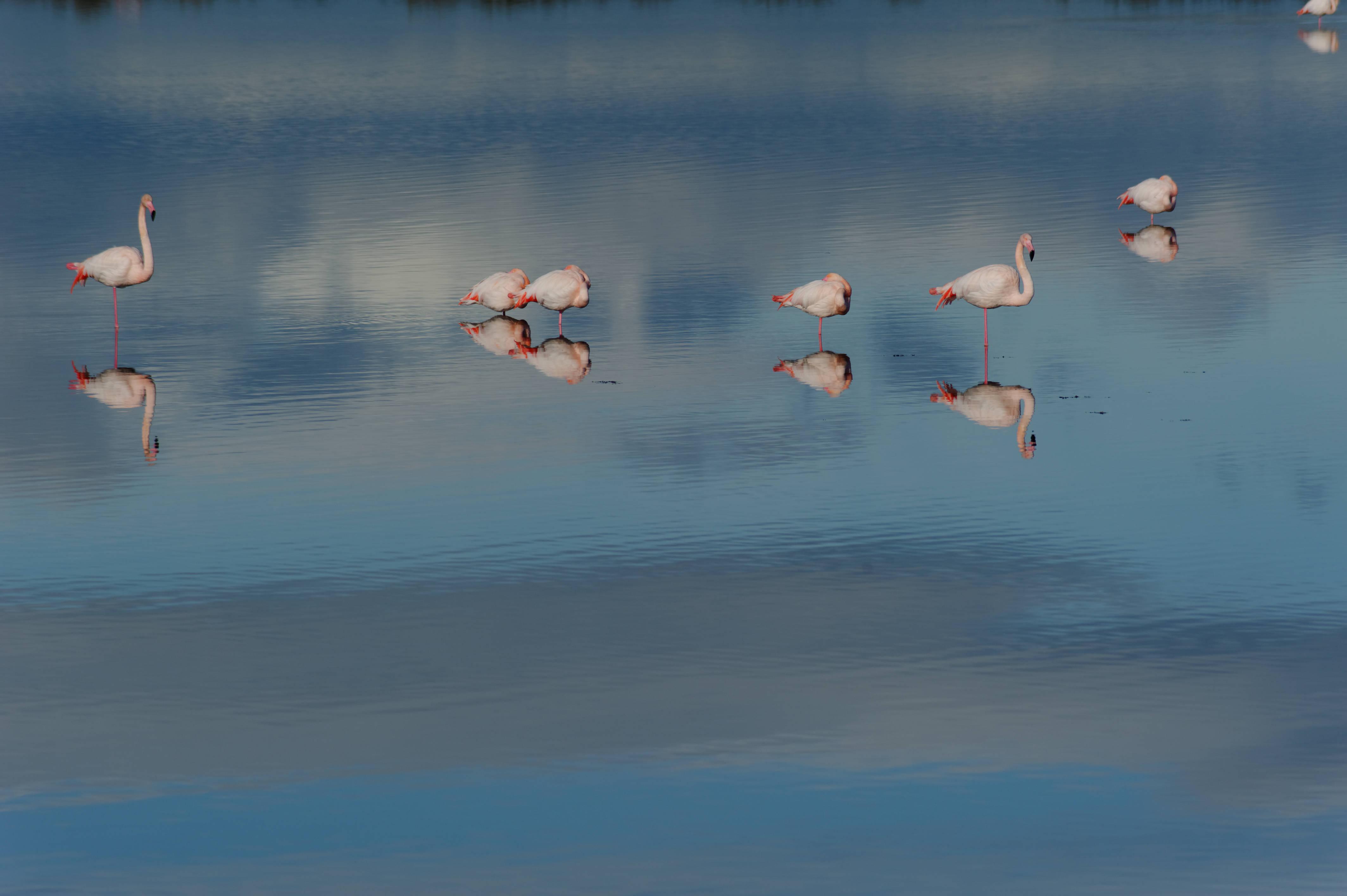 7631_Palavas les flots