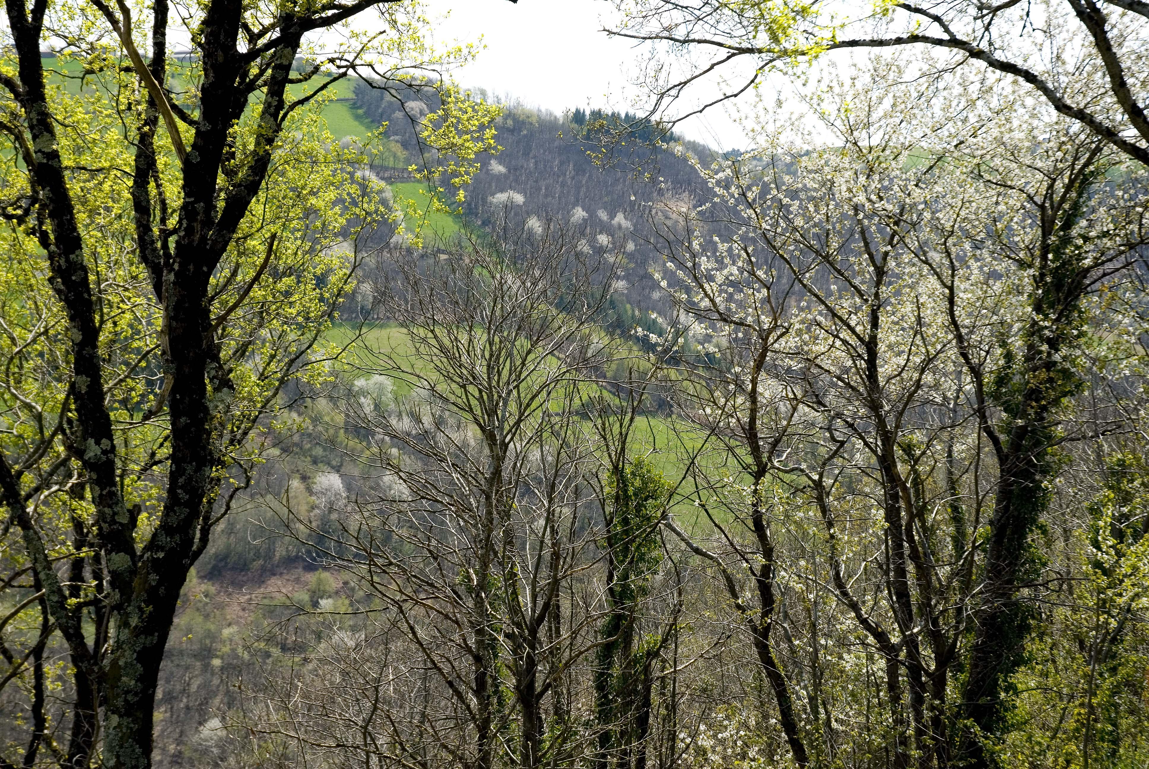 _JF12545-La Vinzelle - Aveyron