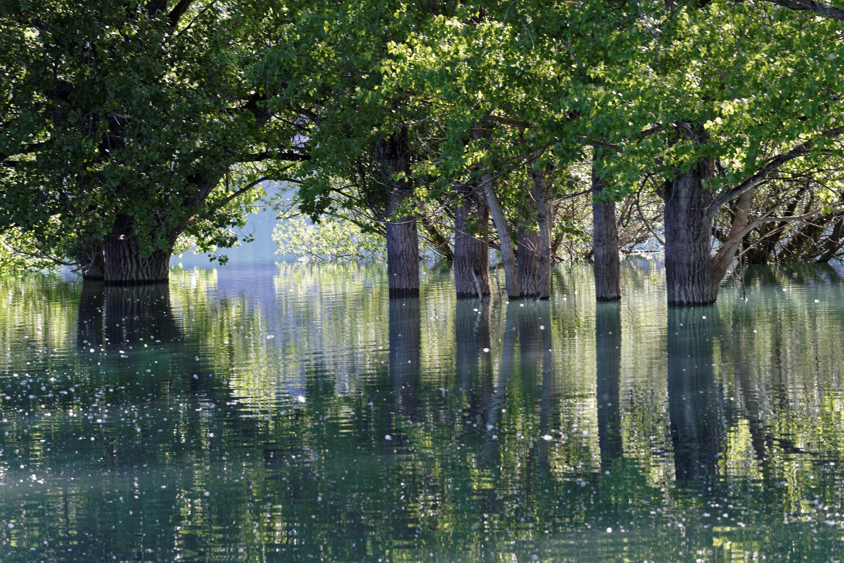 170514-Lac Mediano (Sobrarbe) (121)
