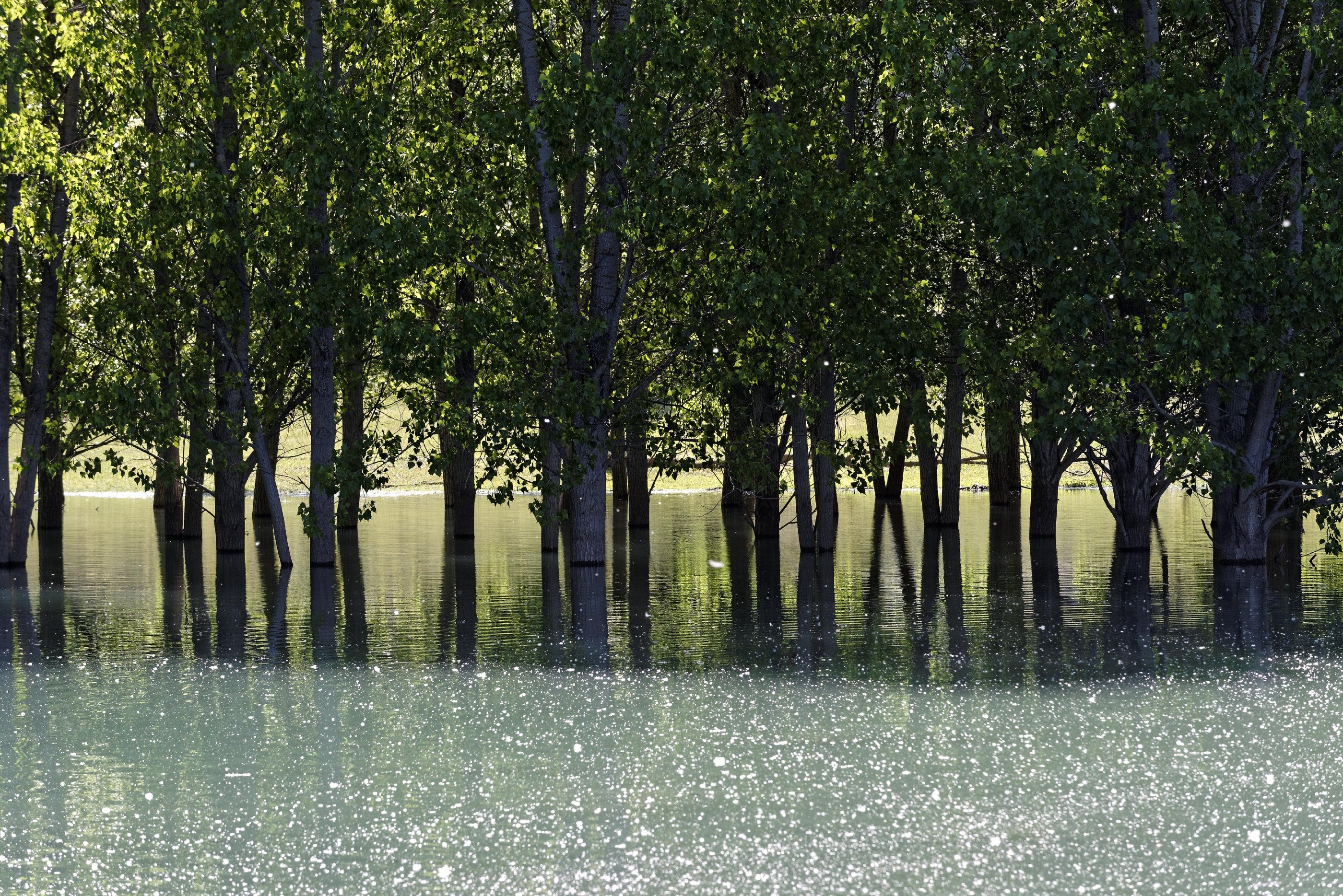 170514-Lac Mediano (Sobrarbe) (122)