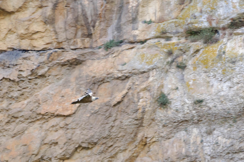 3245_Foz de Lumbier (Aragon)