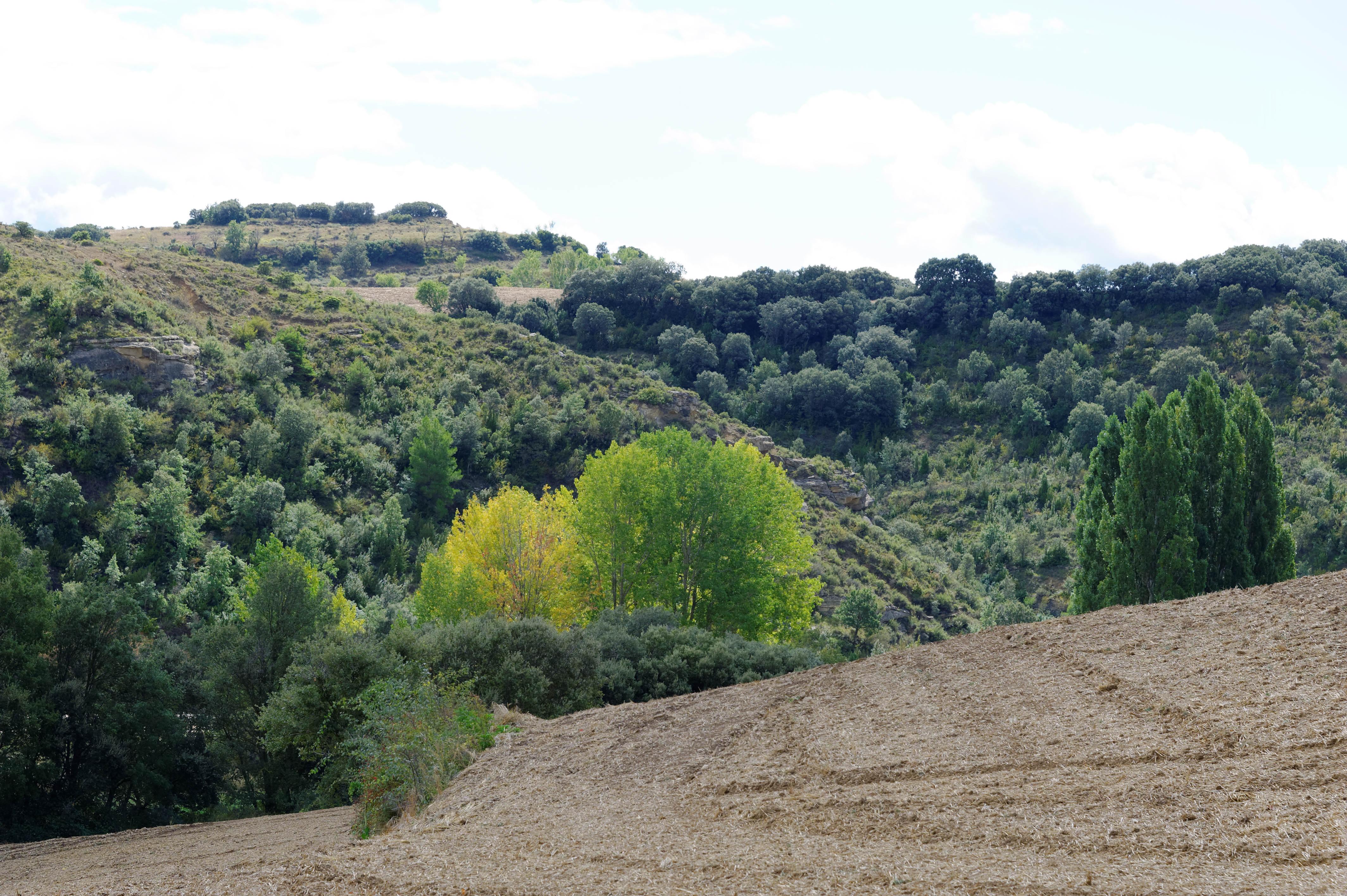 3480_Vers Luesia (Aragon)