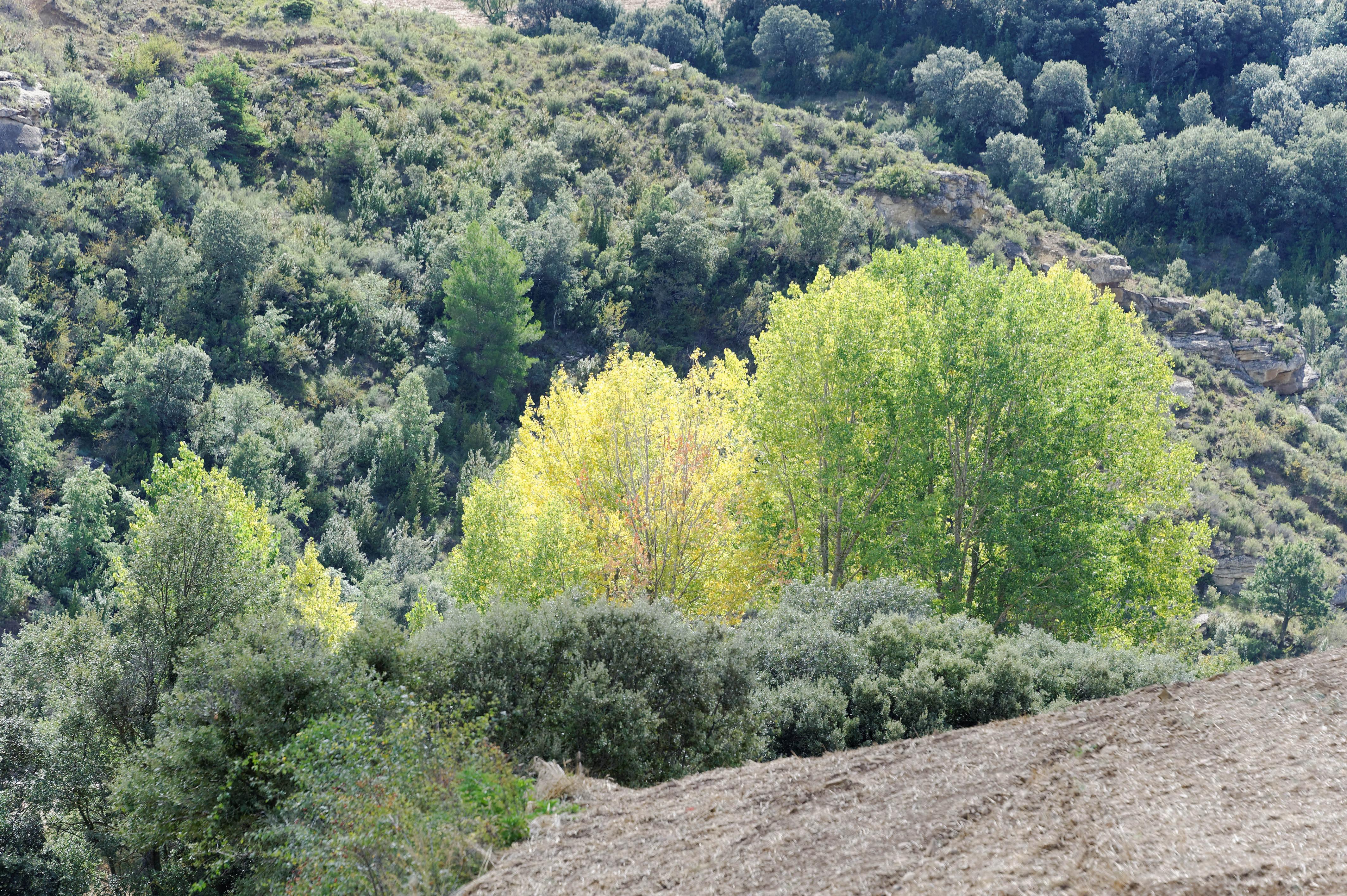 3481_Vers Luesia (Aragon)