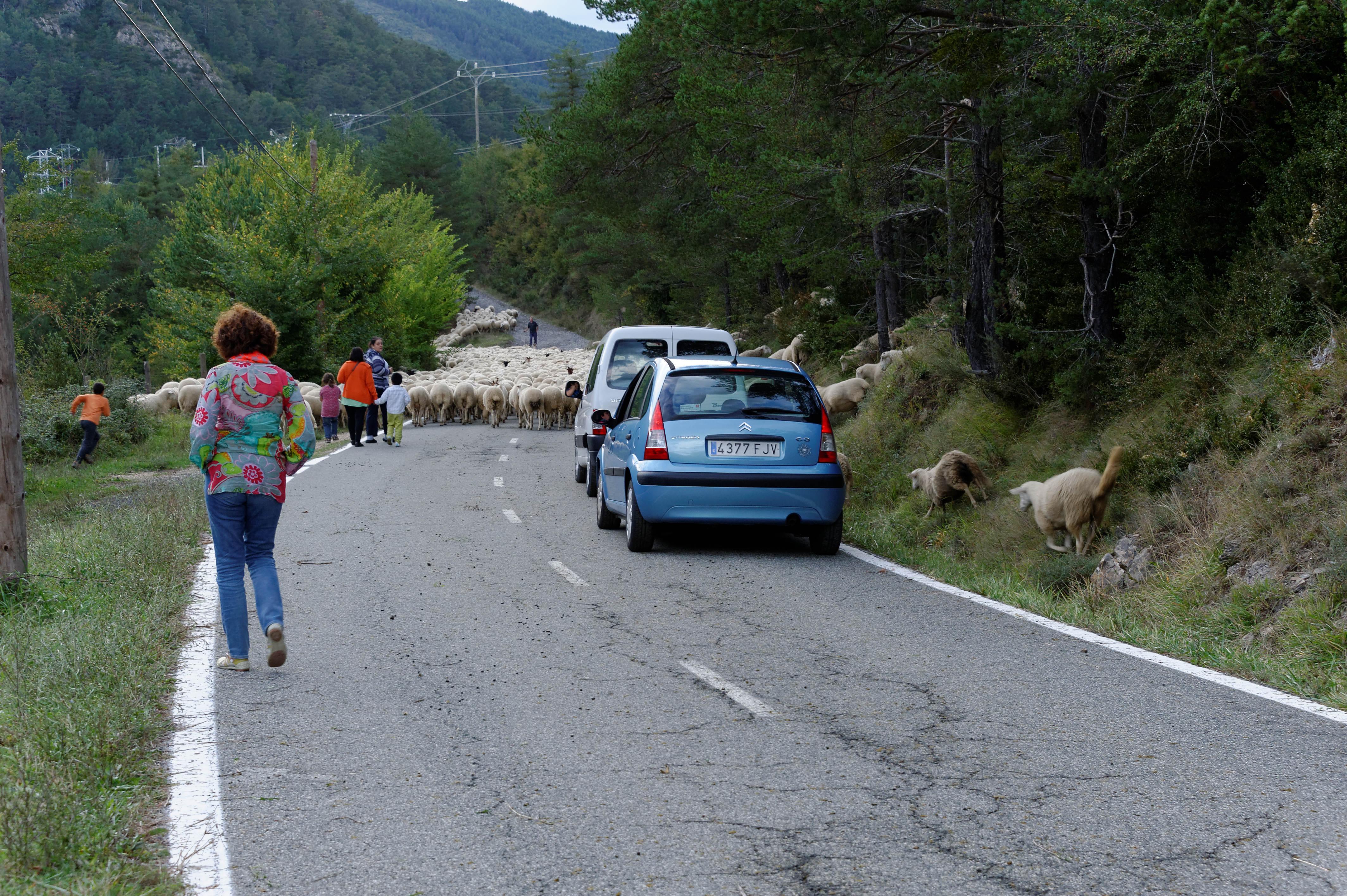 3881_milliers de moutons vers Roncal (Aragon)