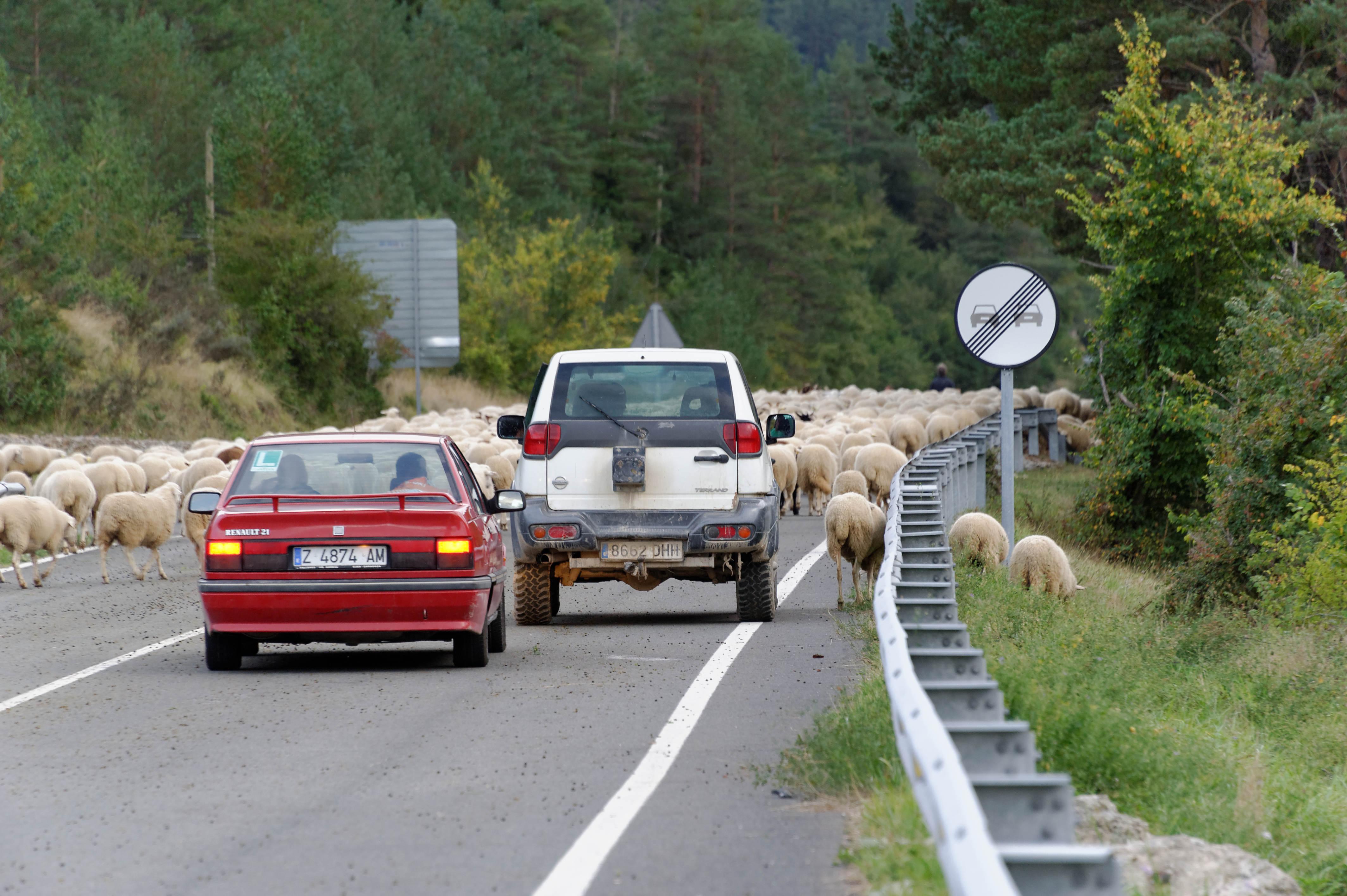 3885_milliers de moutons vers Roncal (Aragon)