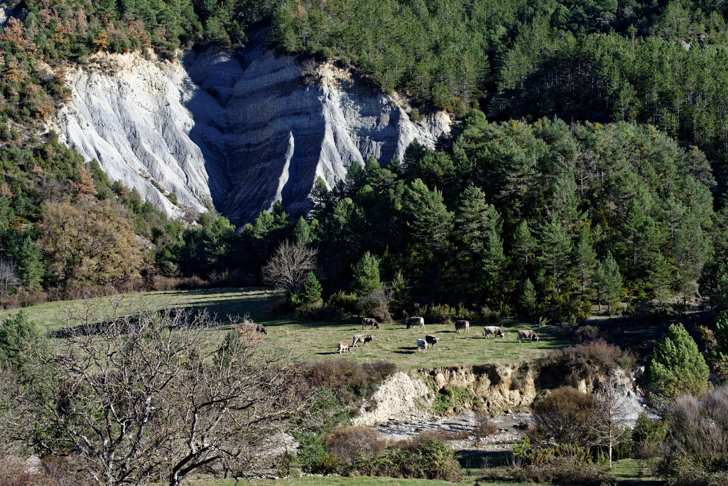 141208-Sieste - Canyon et Barranco (Sobrarbe) (47)