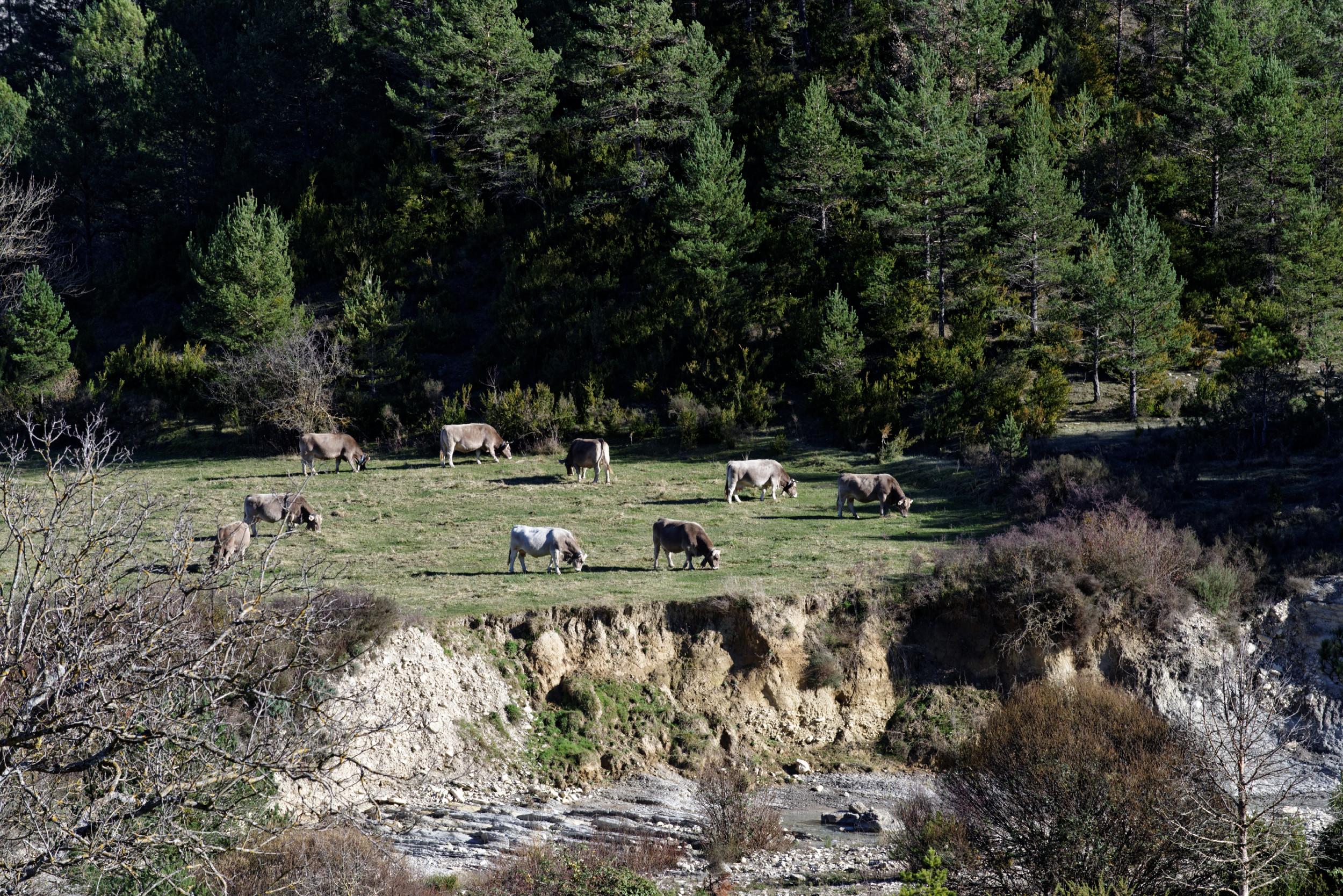 141208-Sieste - Canyon et Barranco (Sobrarbe) (48)