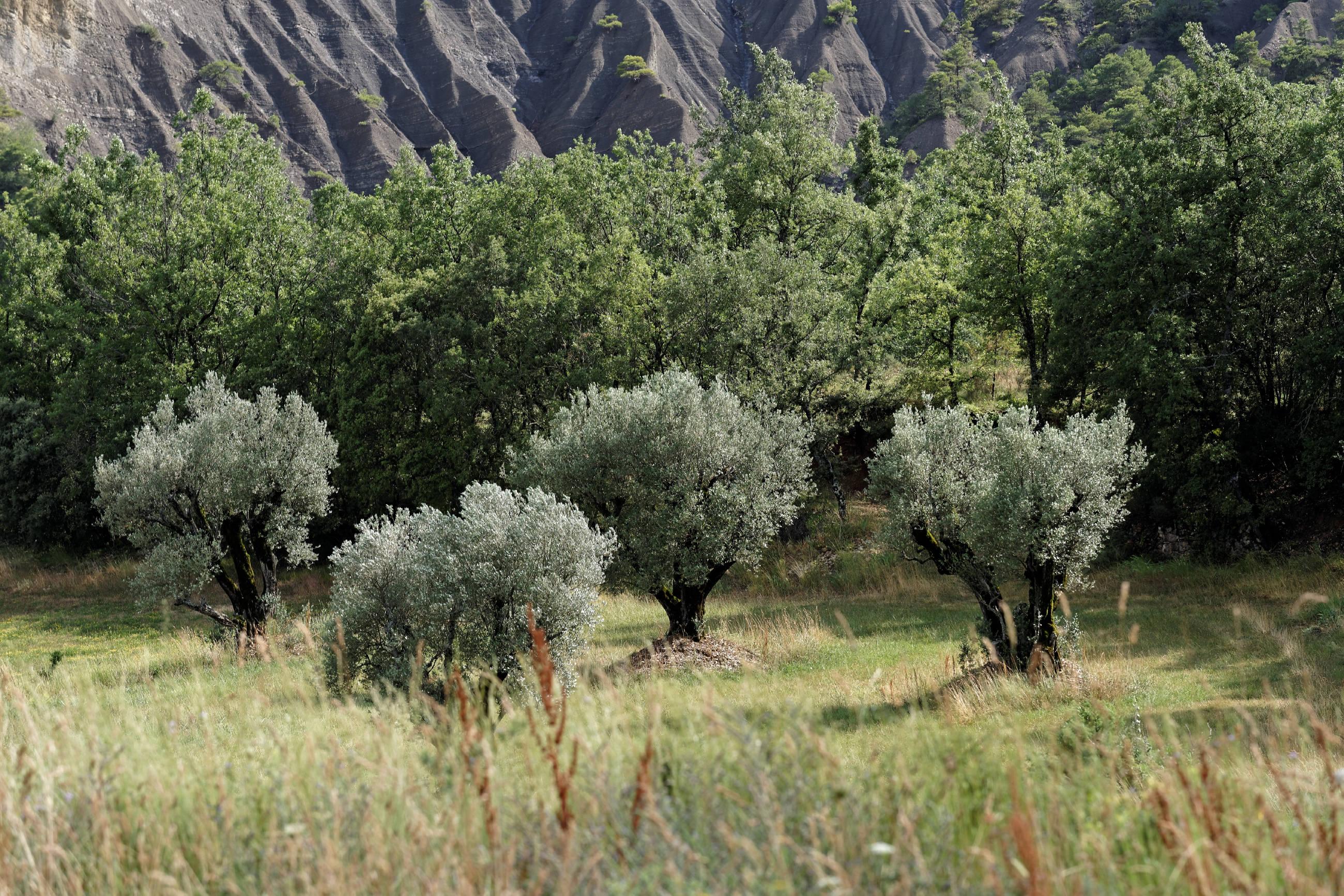 160630-San Vicente de Labuerda (Sobrarbe-Aragon) (27).NEF