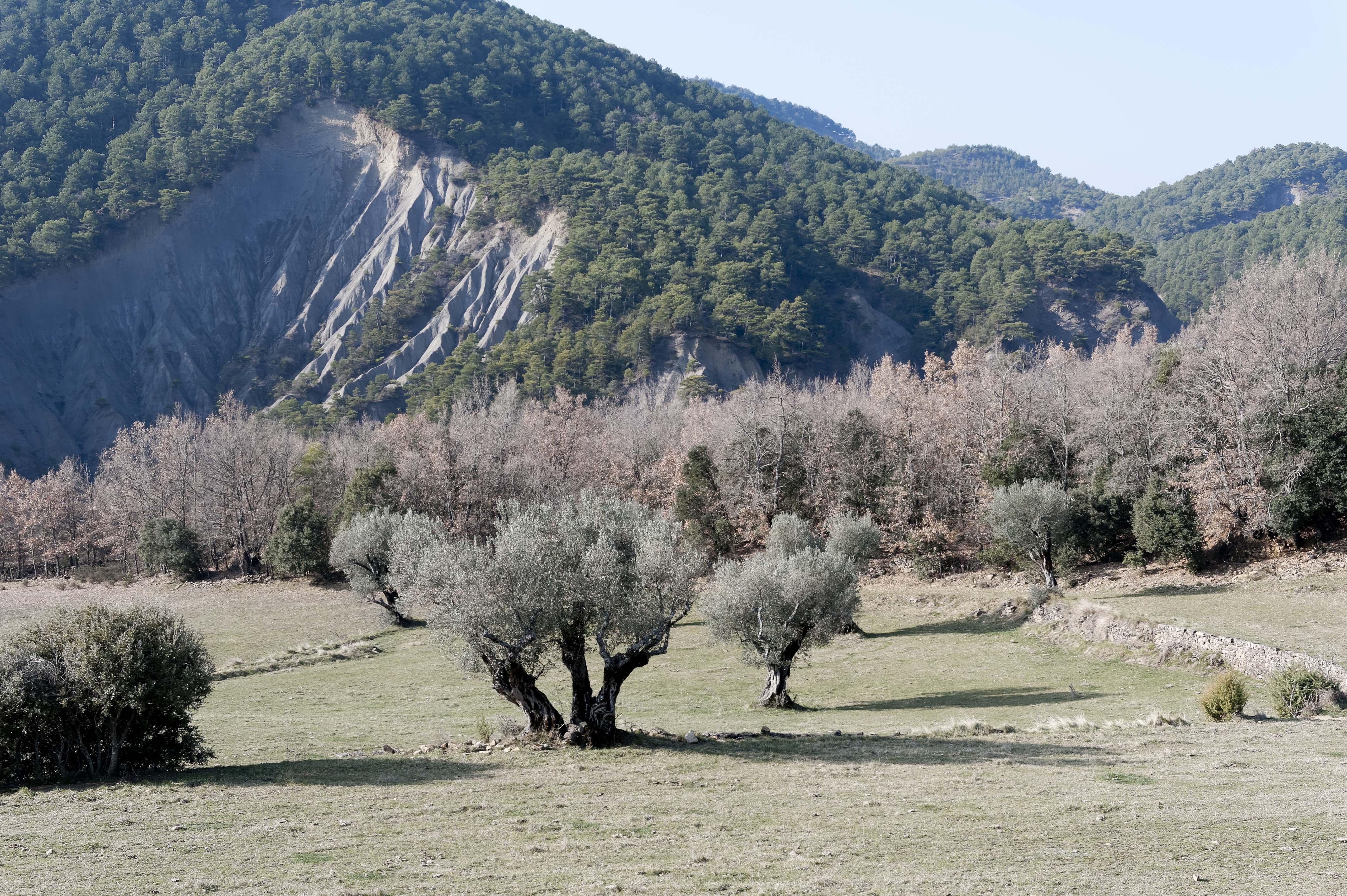 5191_San Vicente de Labuerda (Sobrarbe Aragon)