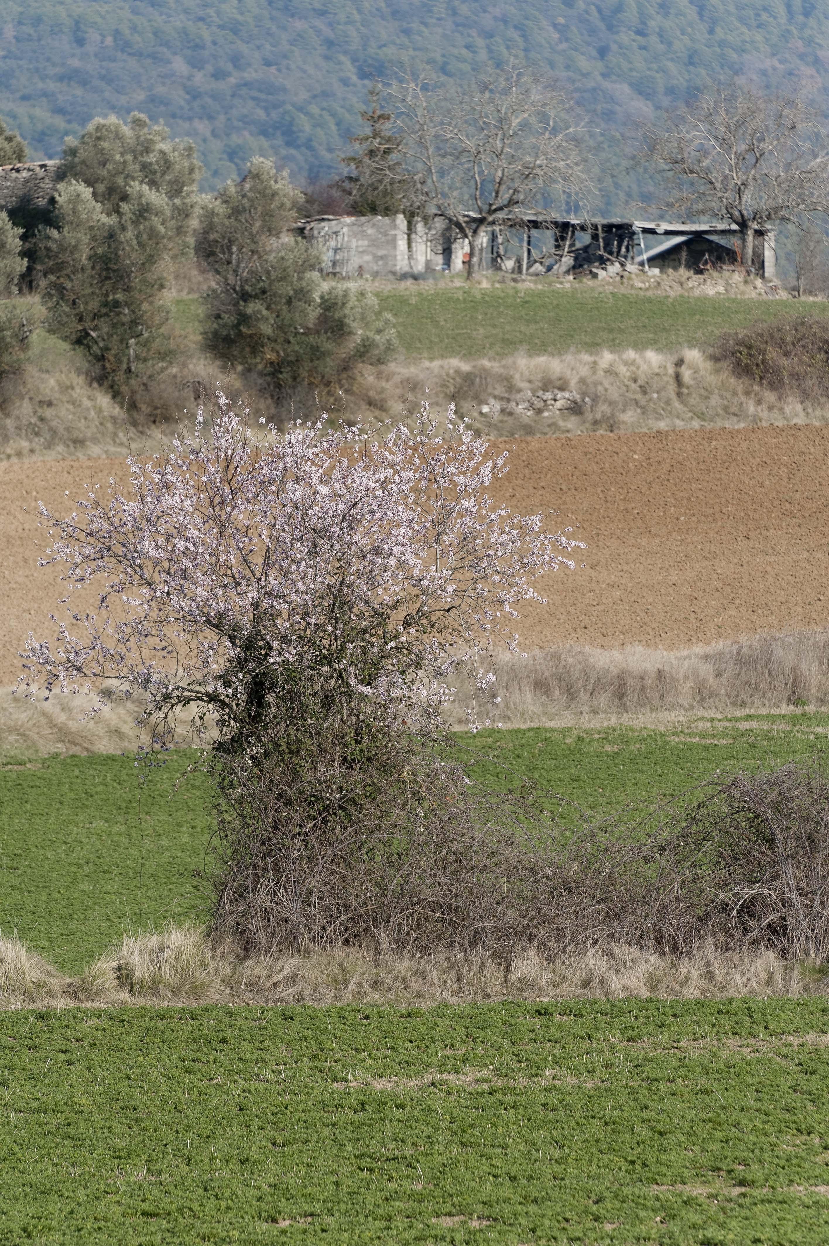 5371_Latorrecilla (Sobrarbe Aragon)