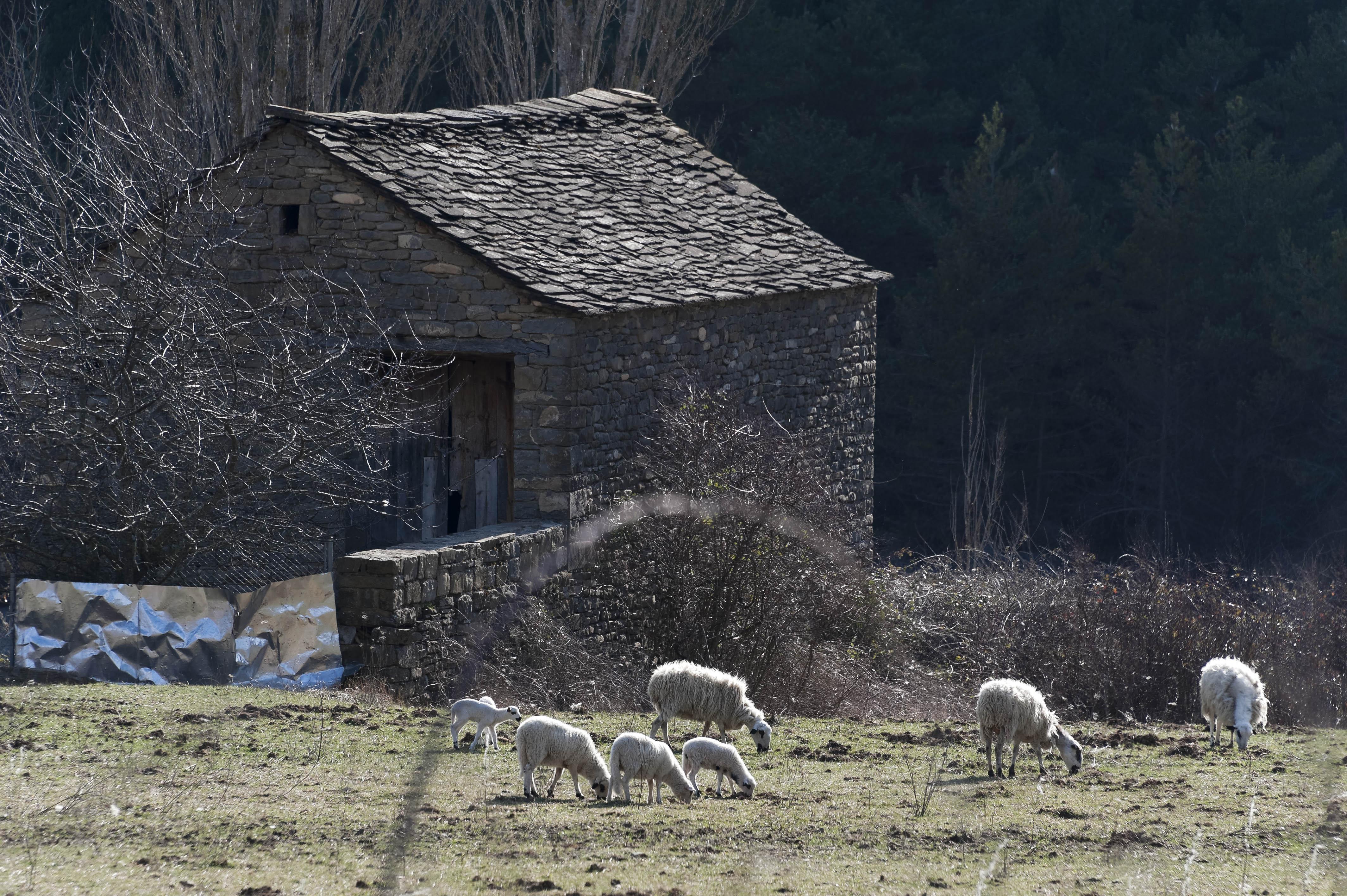 5575_Fiscal (Sobrarbe Aragon)