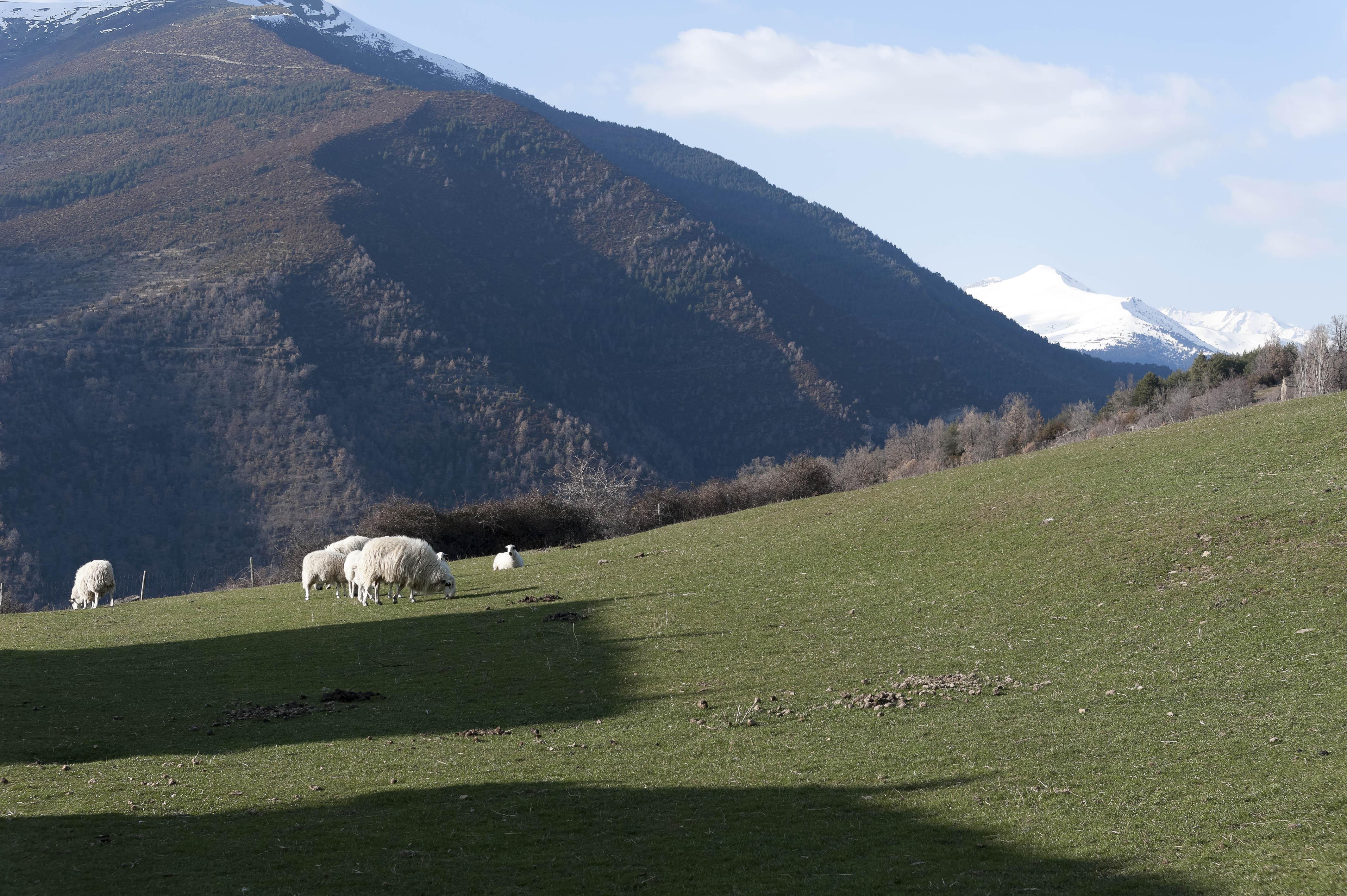 5621_Asin de Broto (Sobrarbe Aragon)
