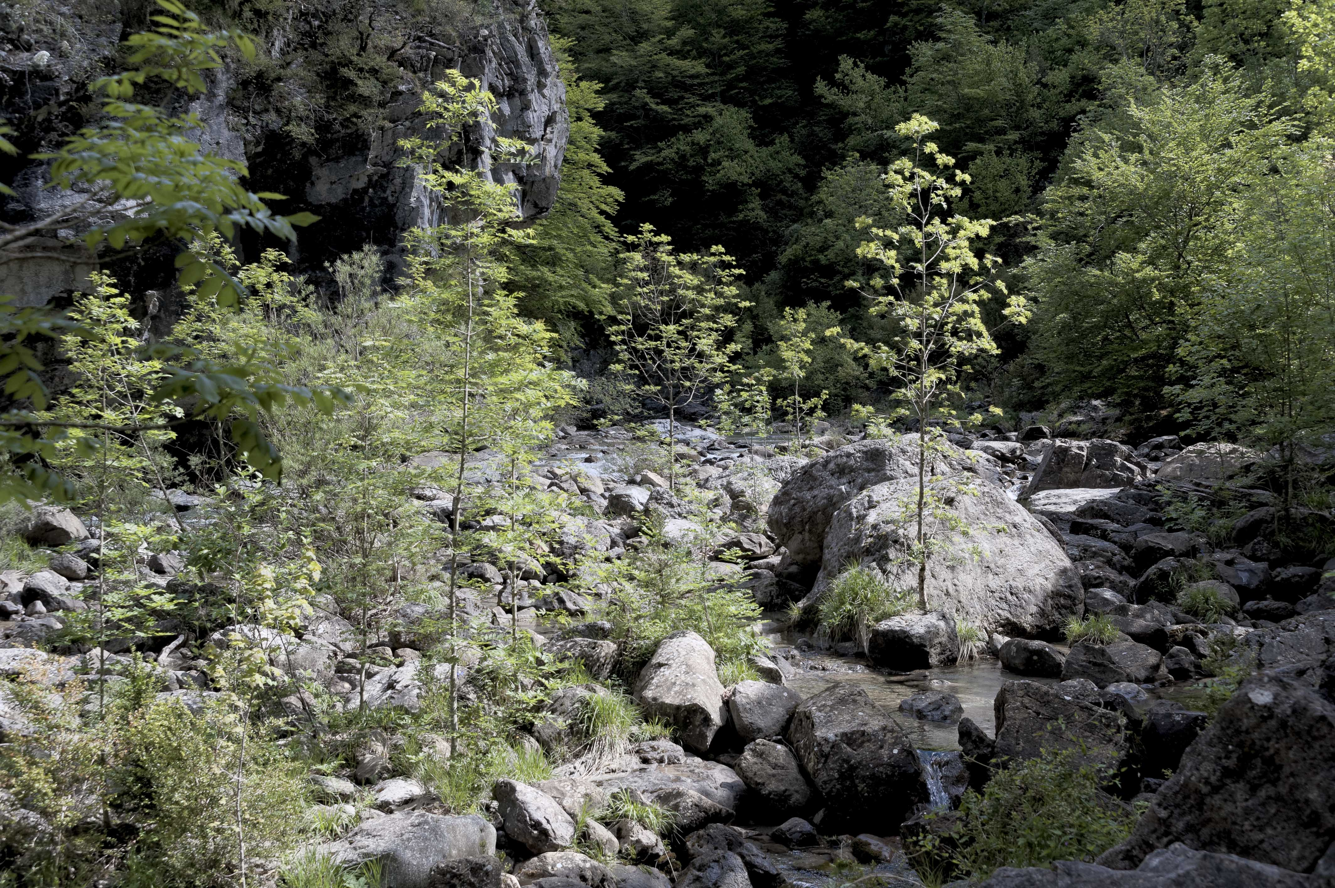 6549_Canyon d'Anisclo (Sobrarbe)