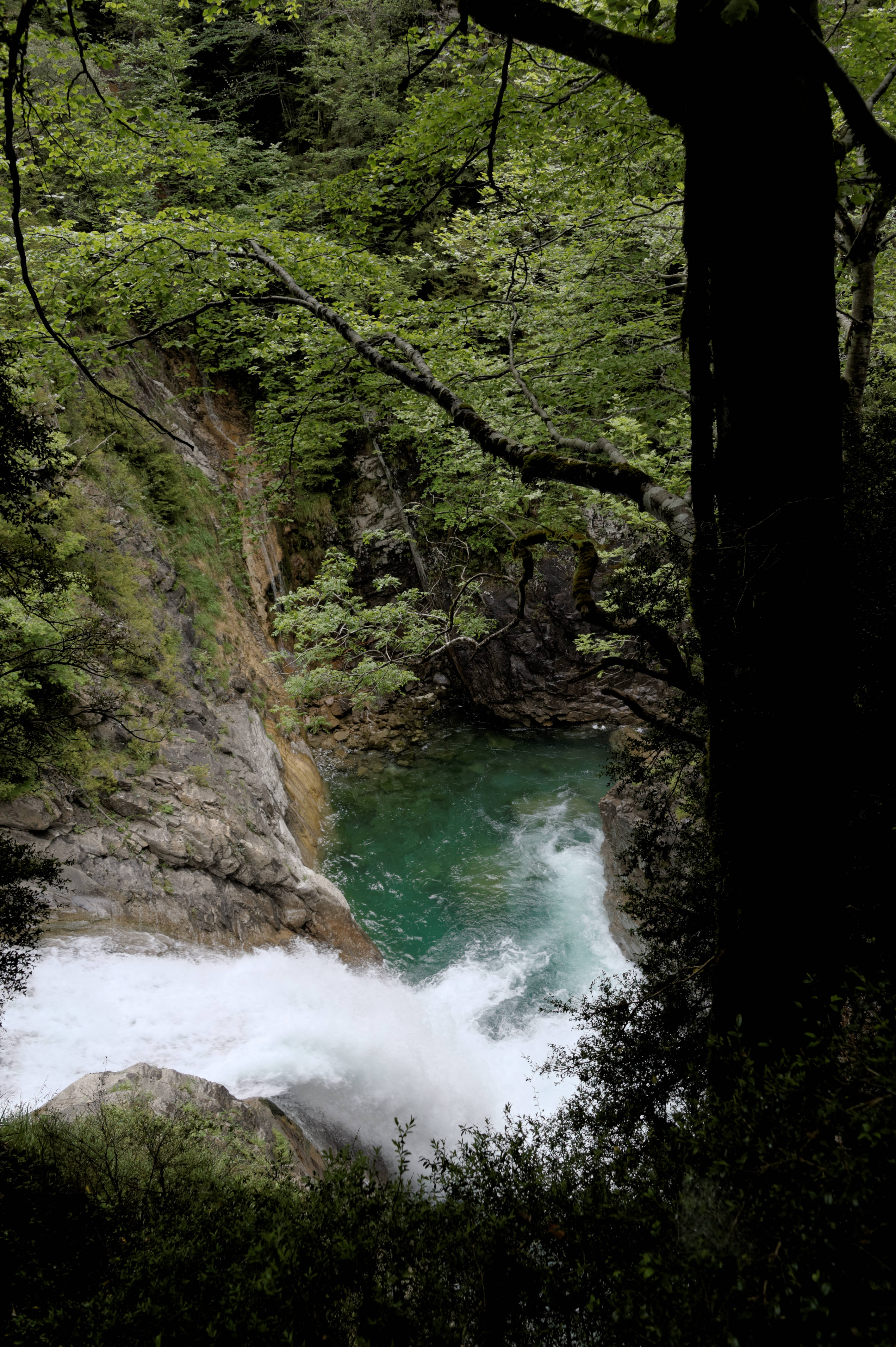 6569_Canyon d'Anisclo (Sobrarbe)