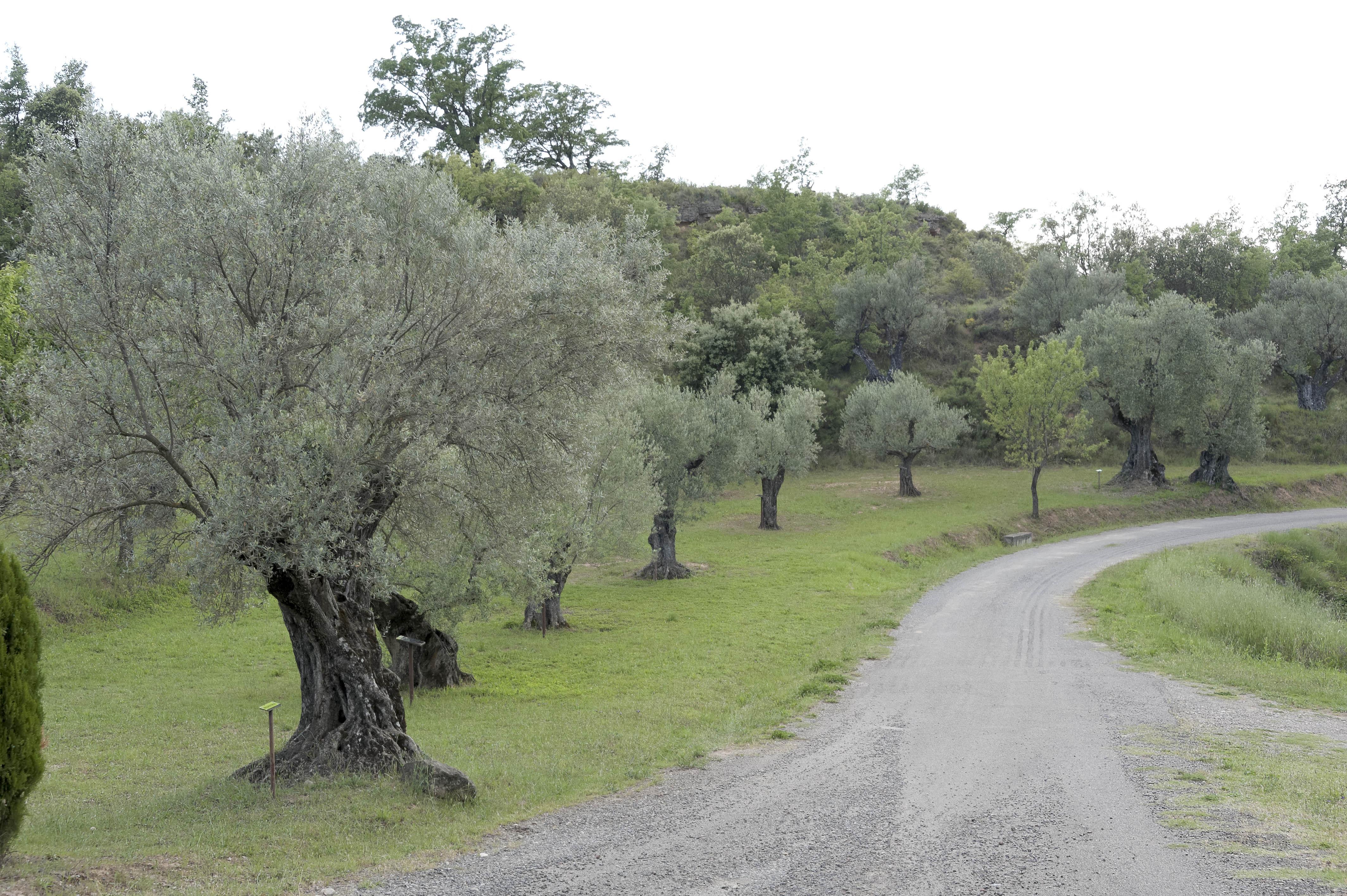 6955_Santa Maria de Dulcis (Somontano)