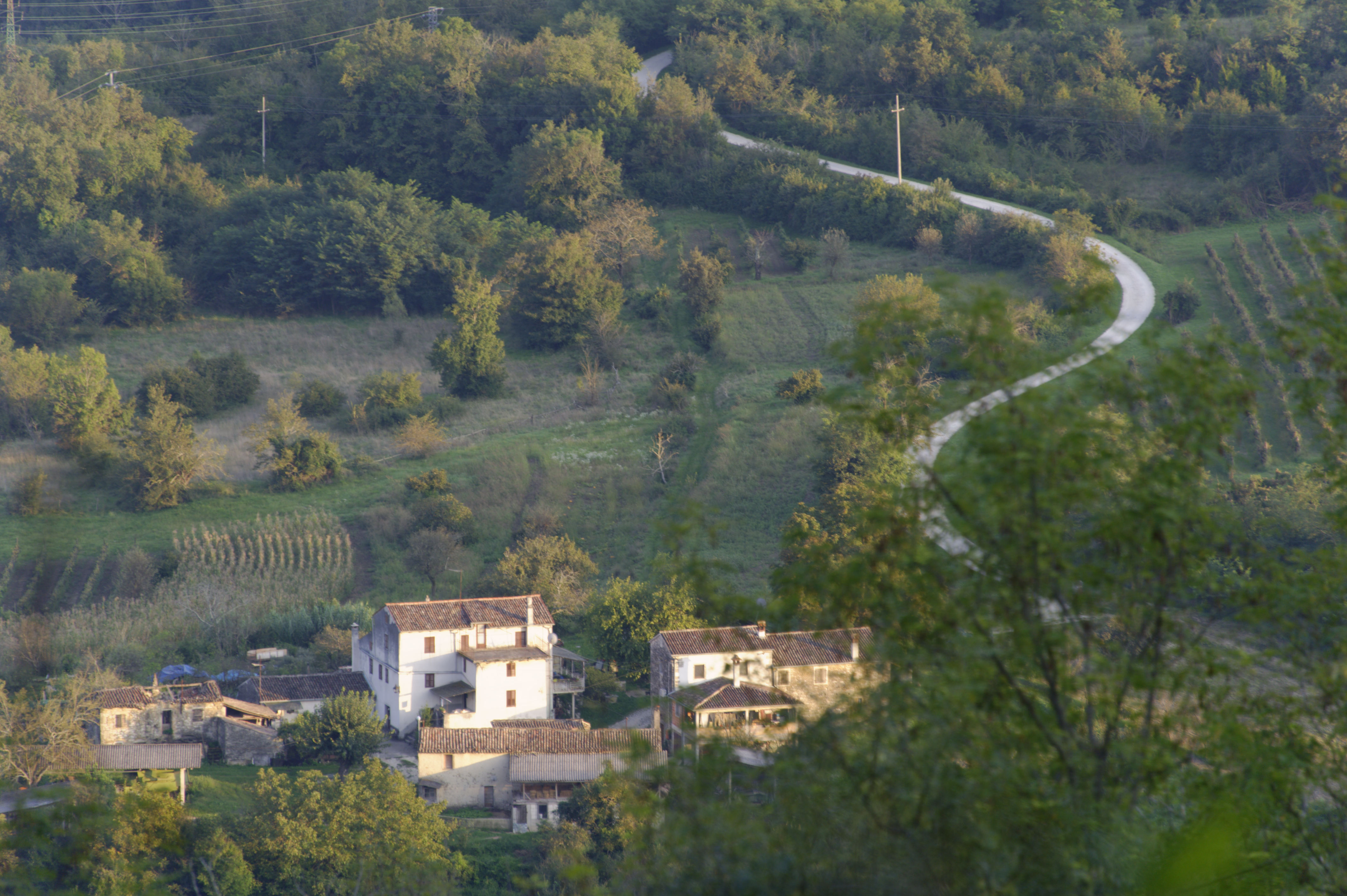 8880-Motovun (Istrie)