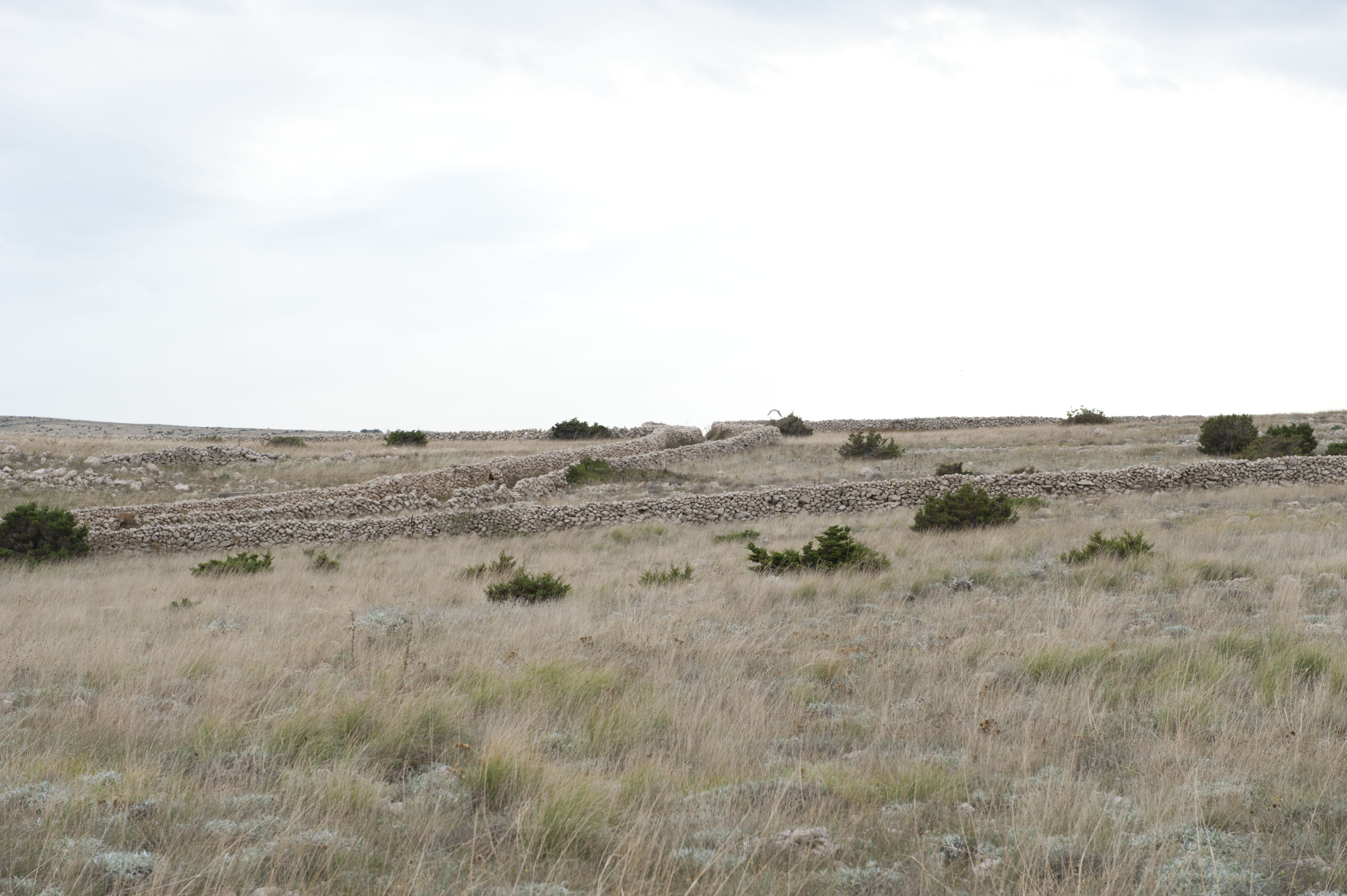 9290-Ile de Pag (Nord Dalmatie)
