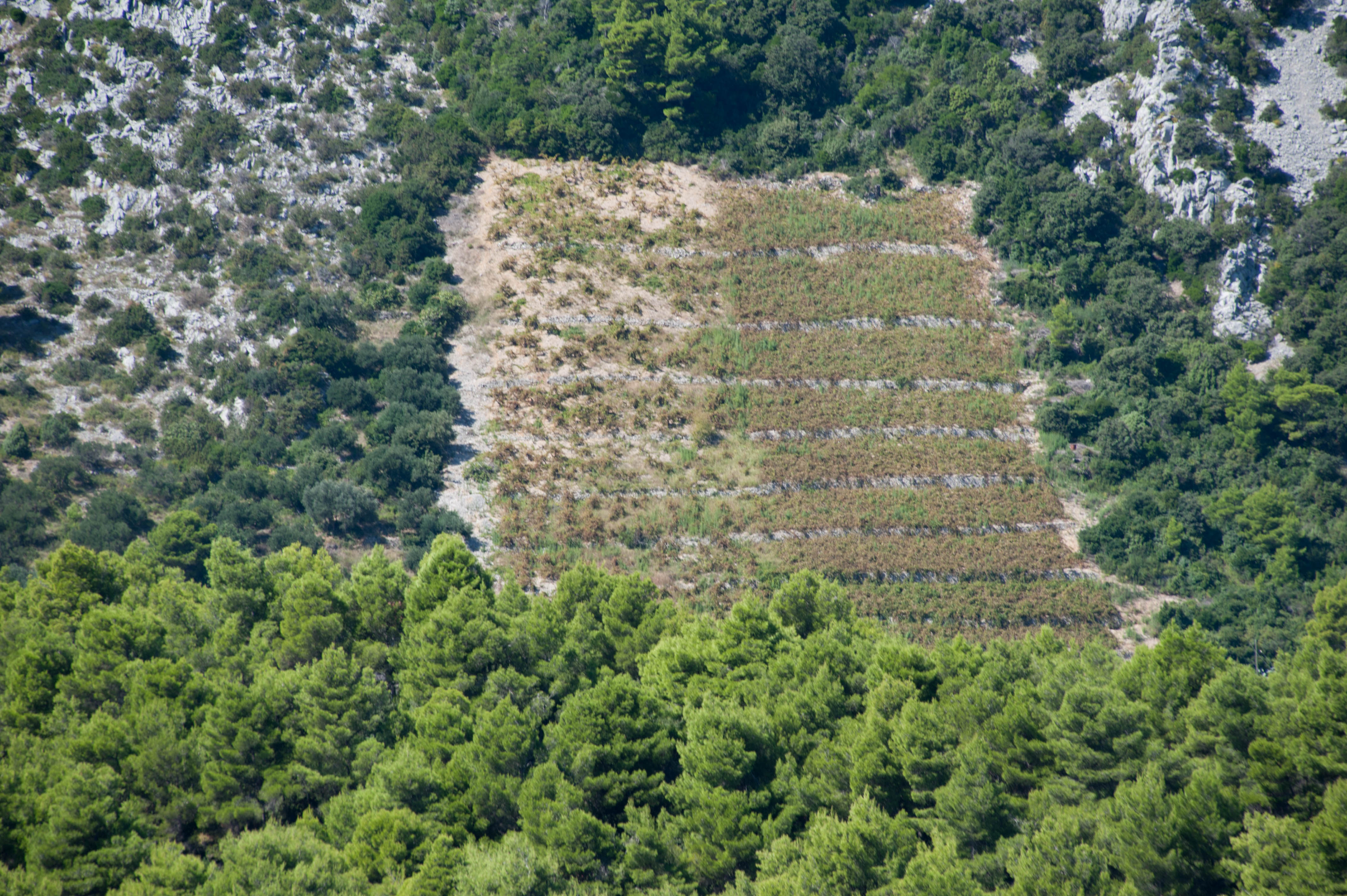 0079-Trstenik (Sud Dalmatie)