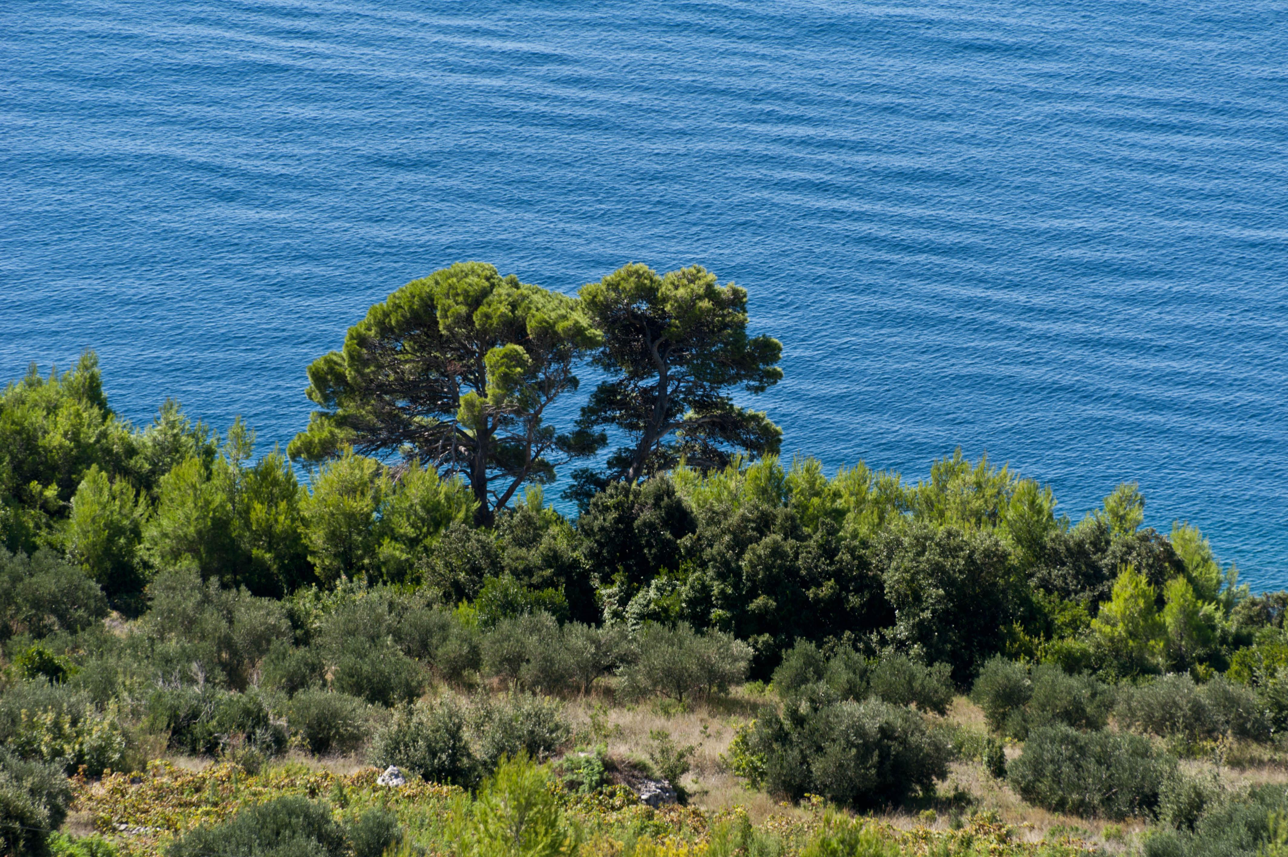 0081-Trstenik (Sud Dalmatie)