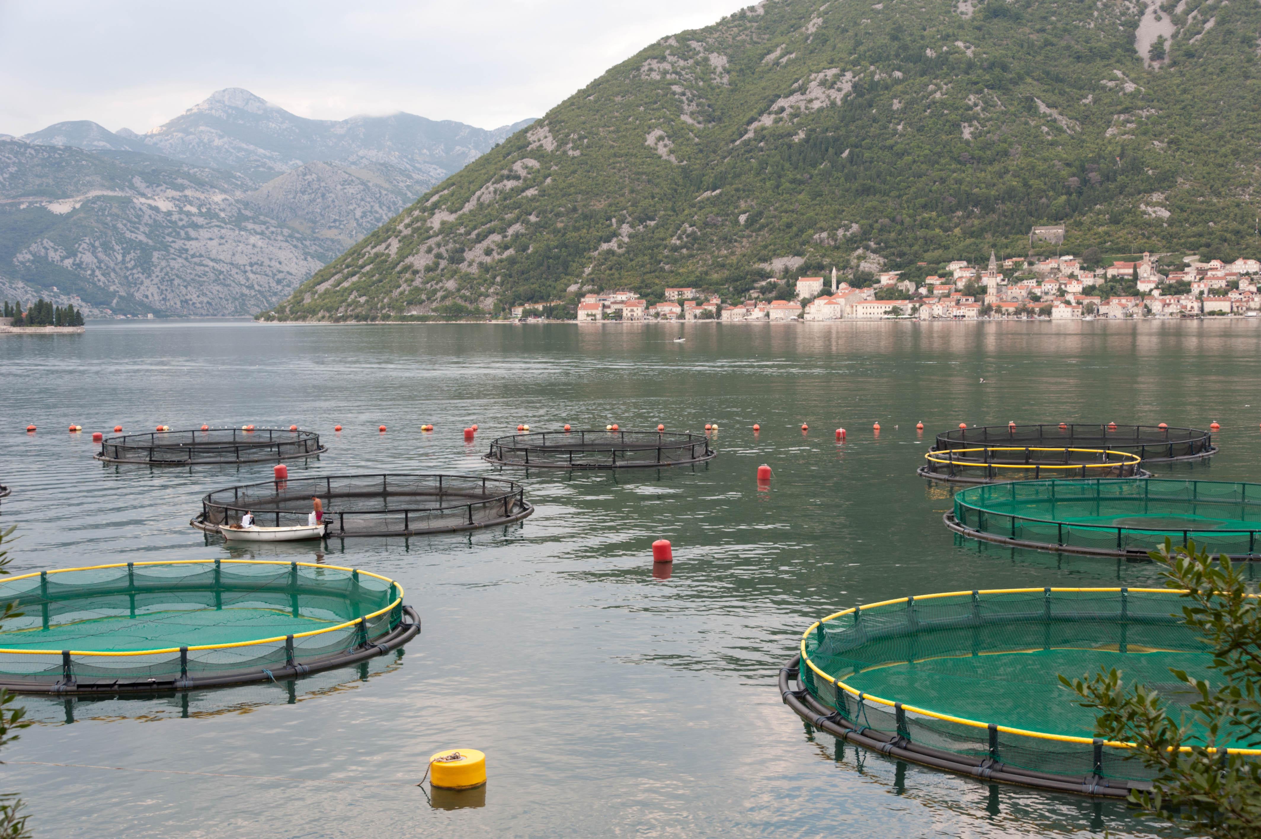 0276-Perast - Bouches de Kotor (Montenegro)