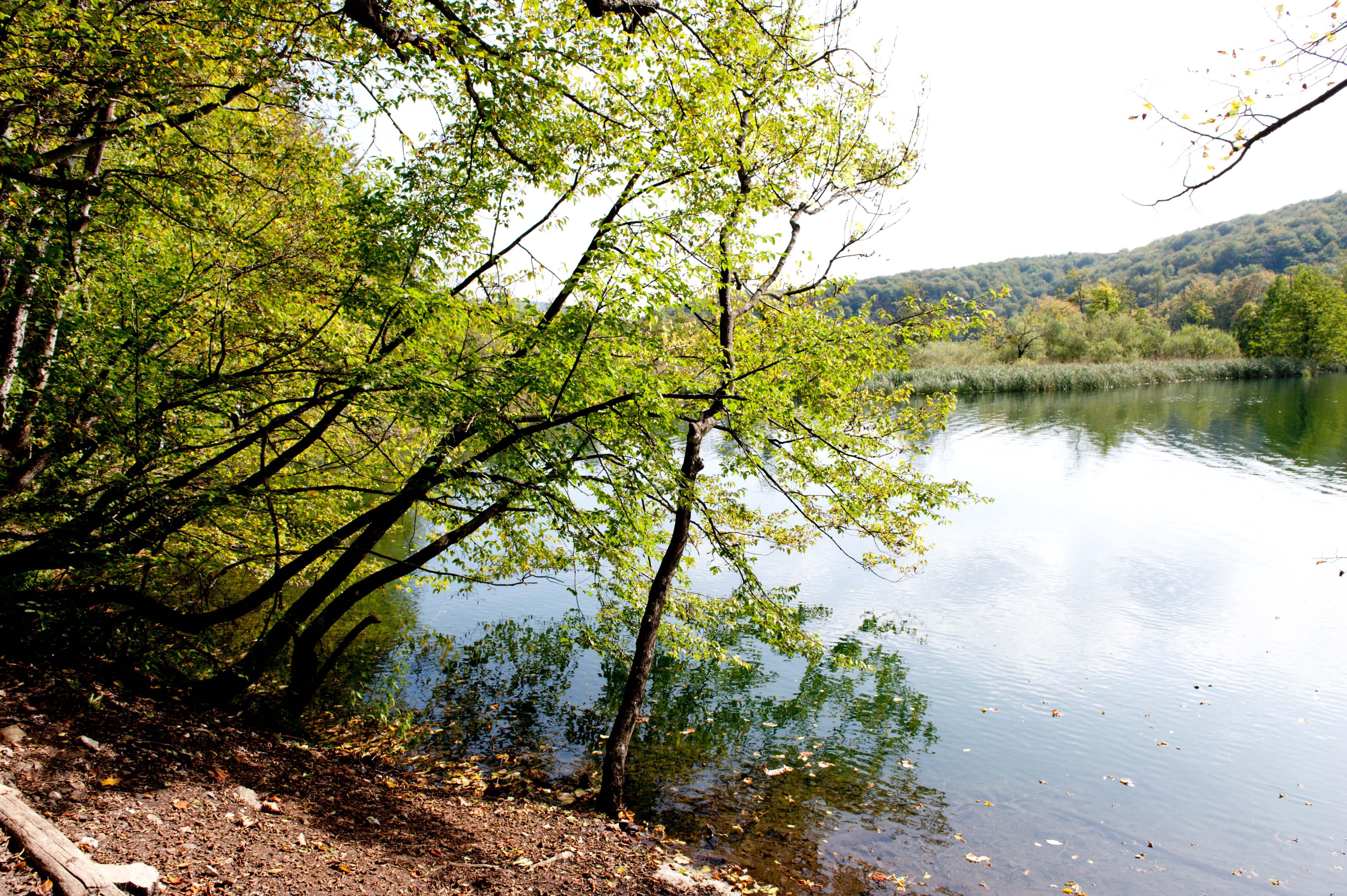 0525-Parc national lacs de Plitvice (Lika-Croatie)