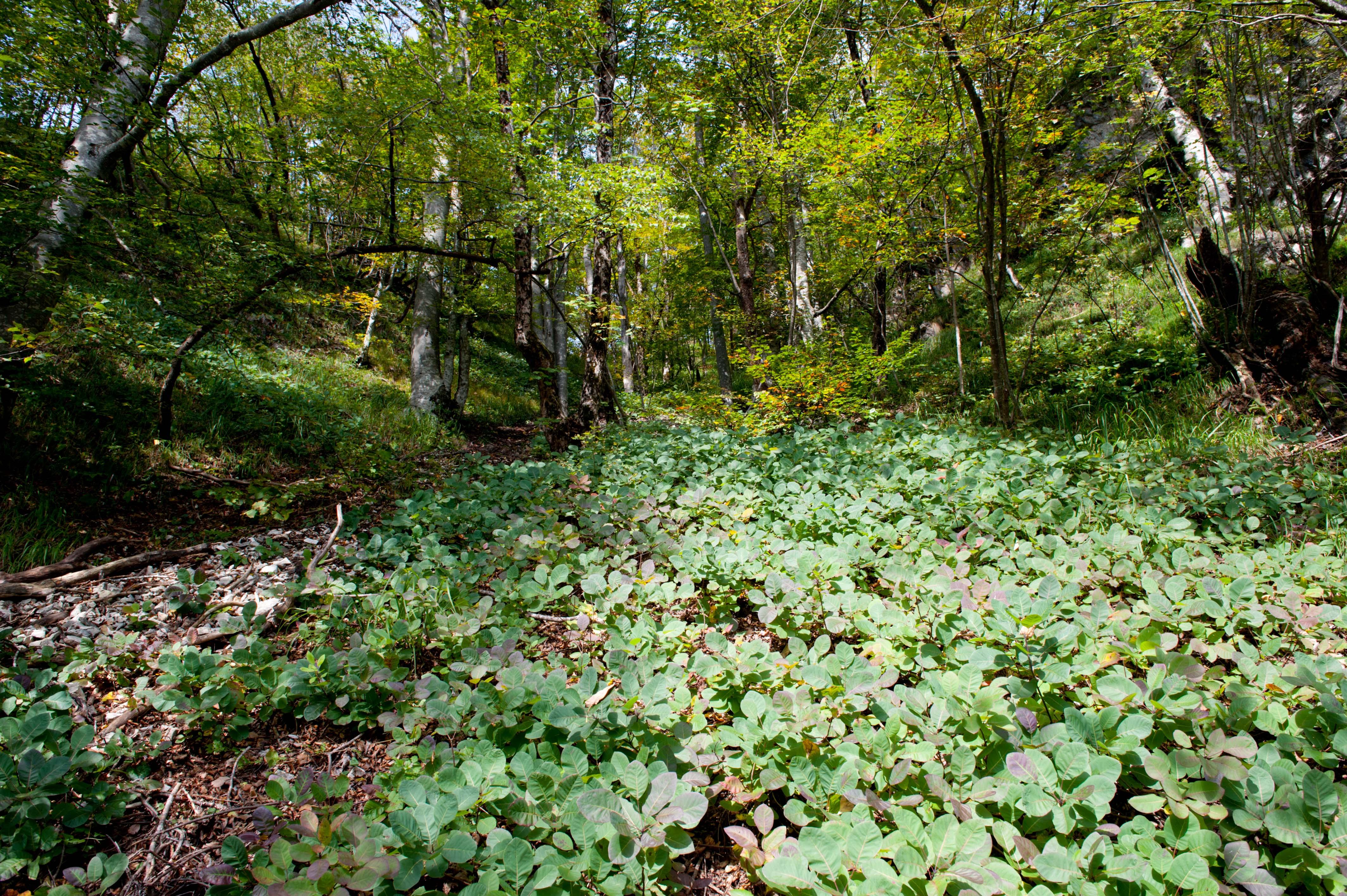 0526-Parc national lacs de Plitvice (Lika-Croatie)