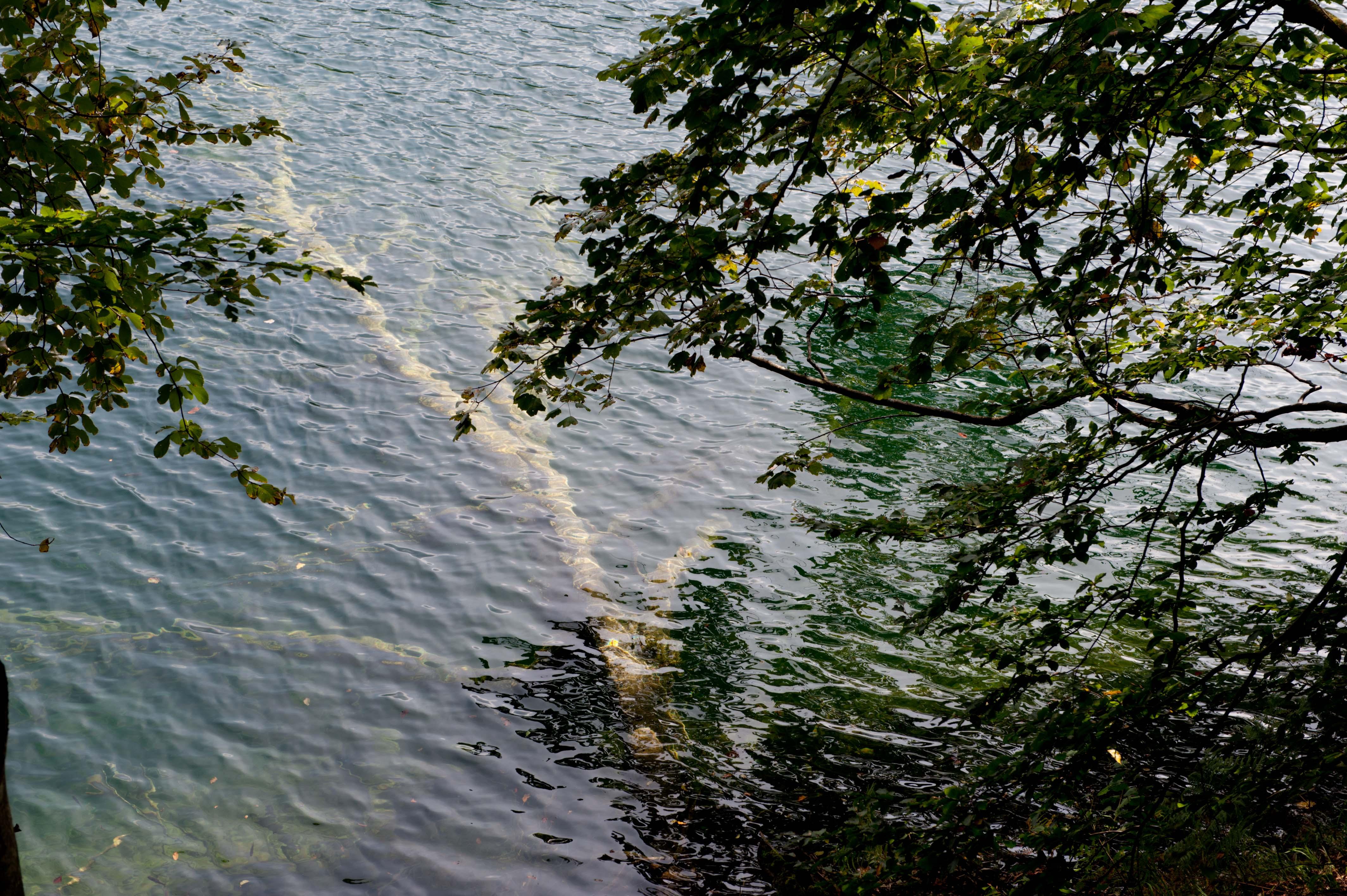 0541-Parc national lacs de Plitvice (Lika-Croatie)