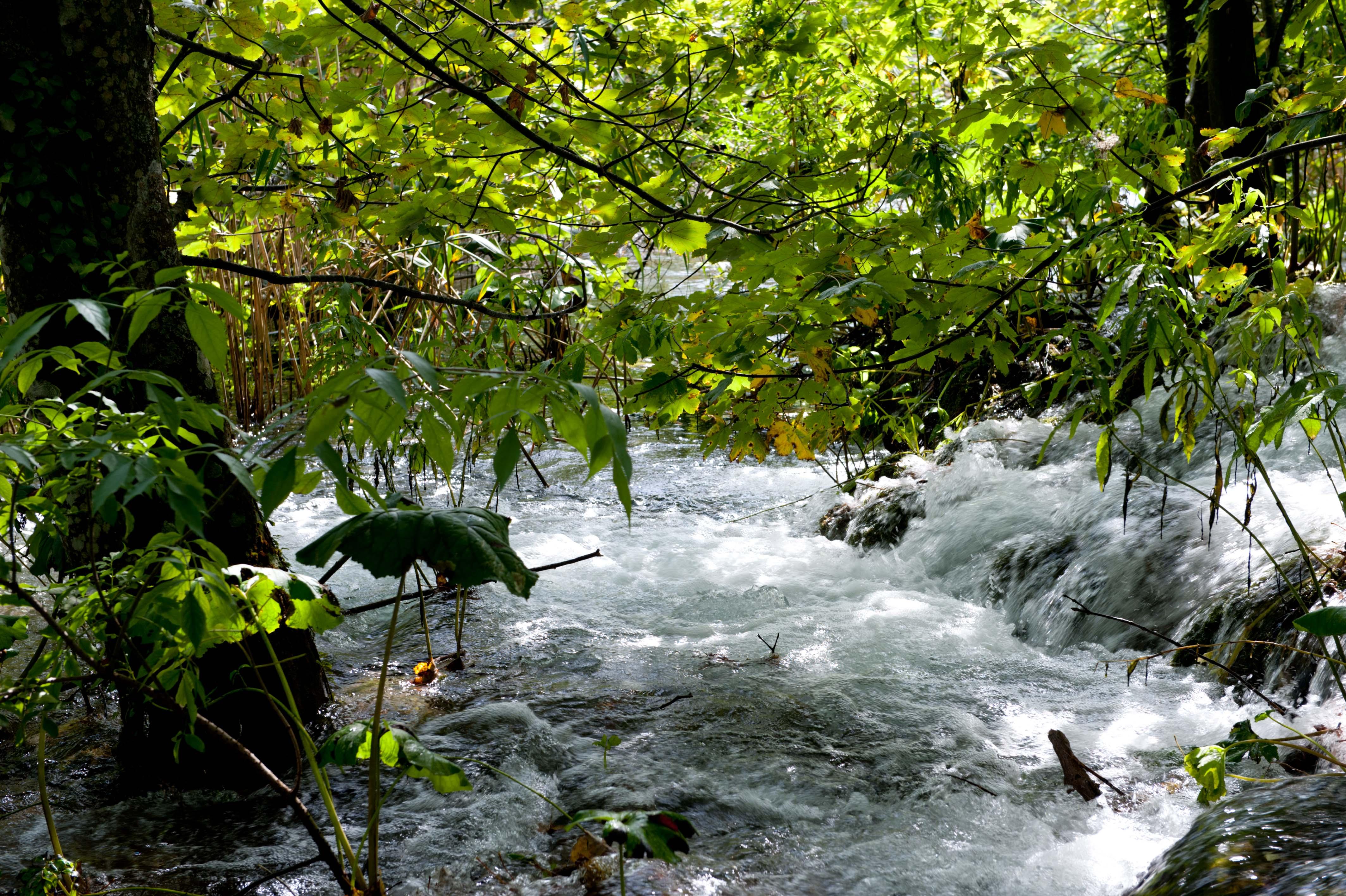 0549-Parc national lacs de Plitvice (Lika-Croatie)