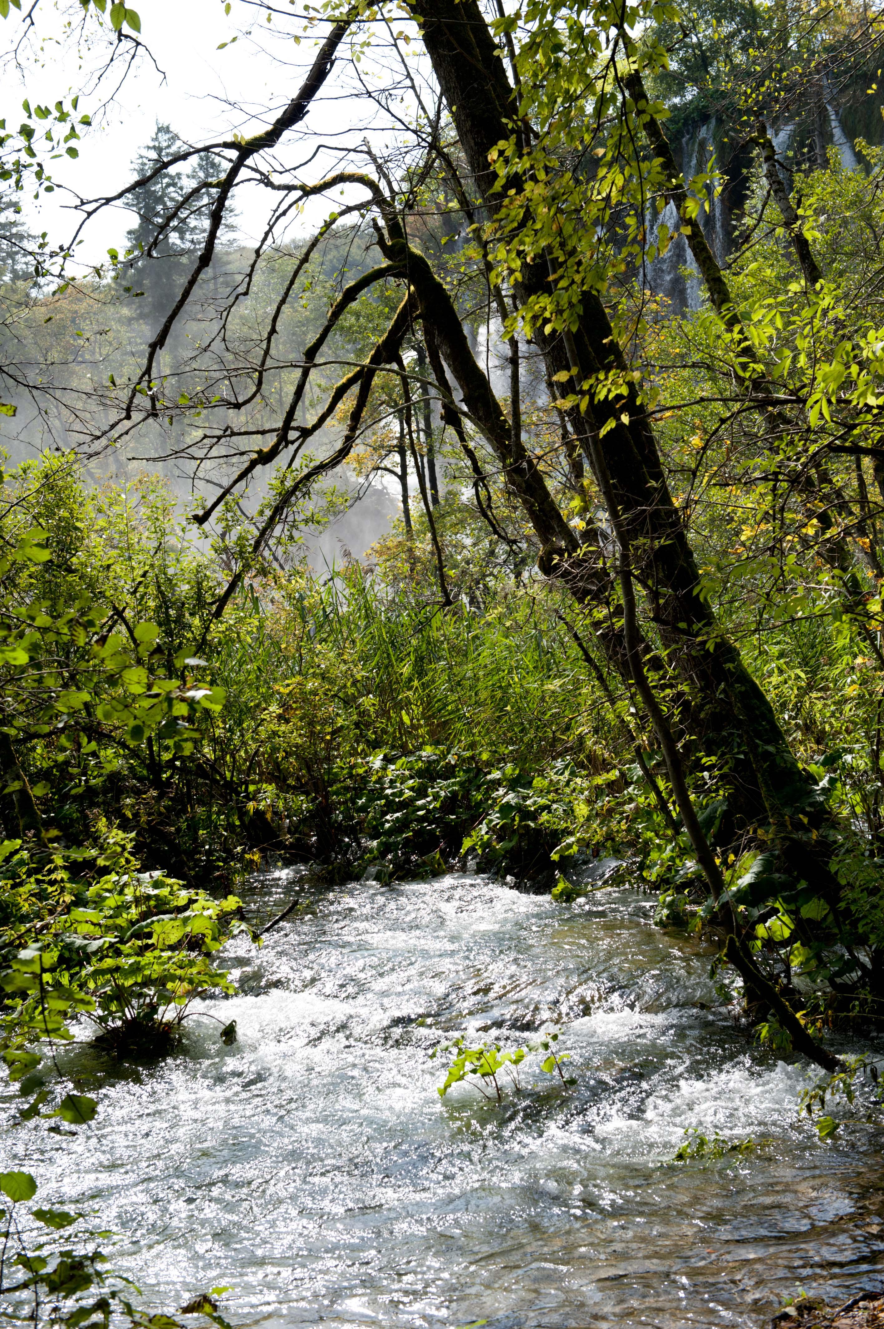 0561-Parc national lacs de Plitvice (Lika-Croatie)