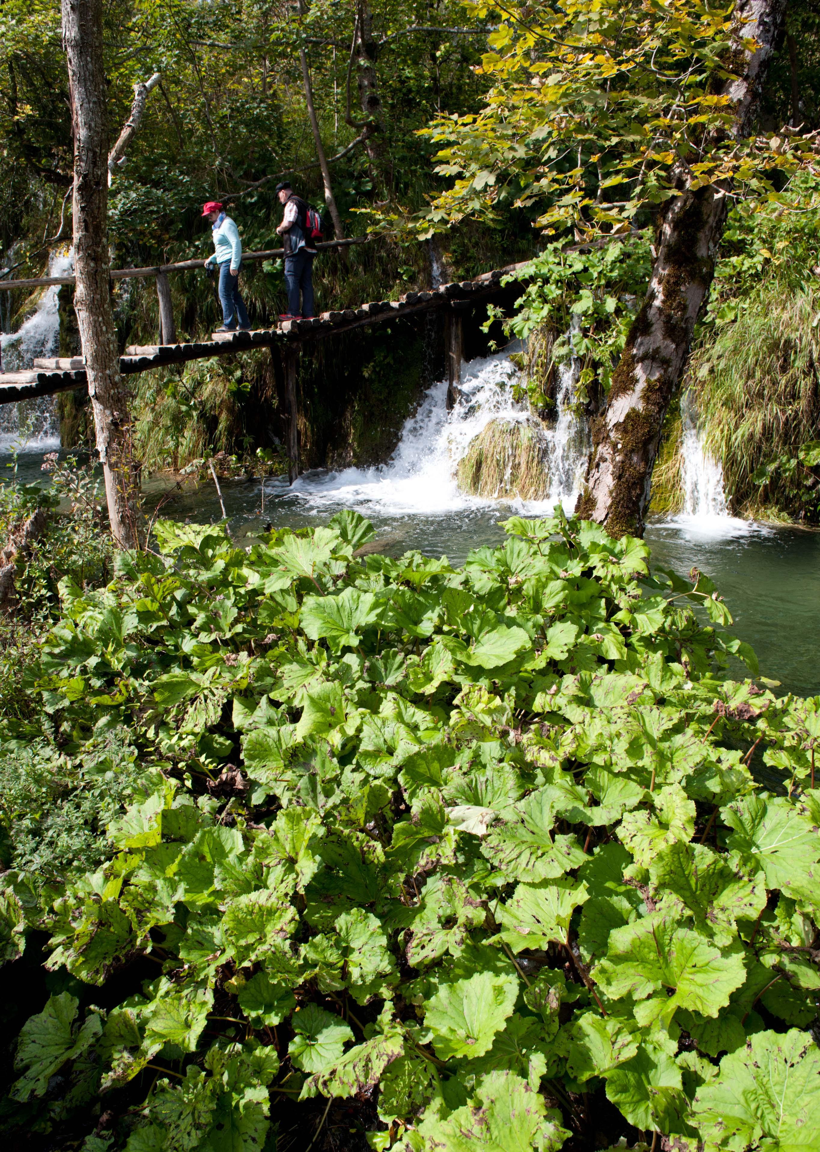0570-Parc national lacs de Plitvice (Lika-Croatie)
