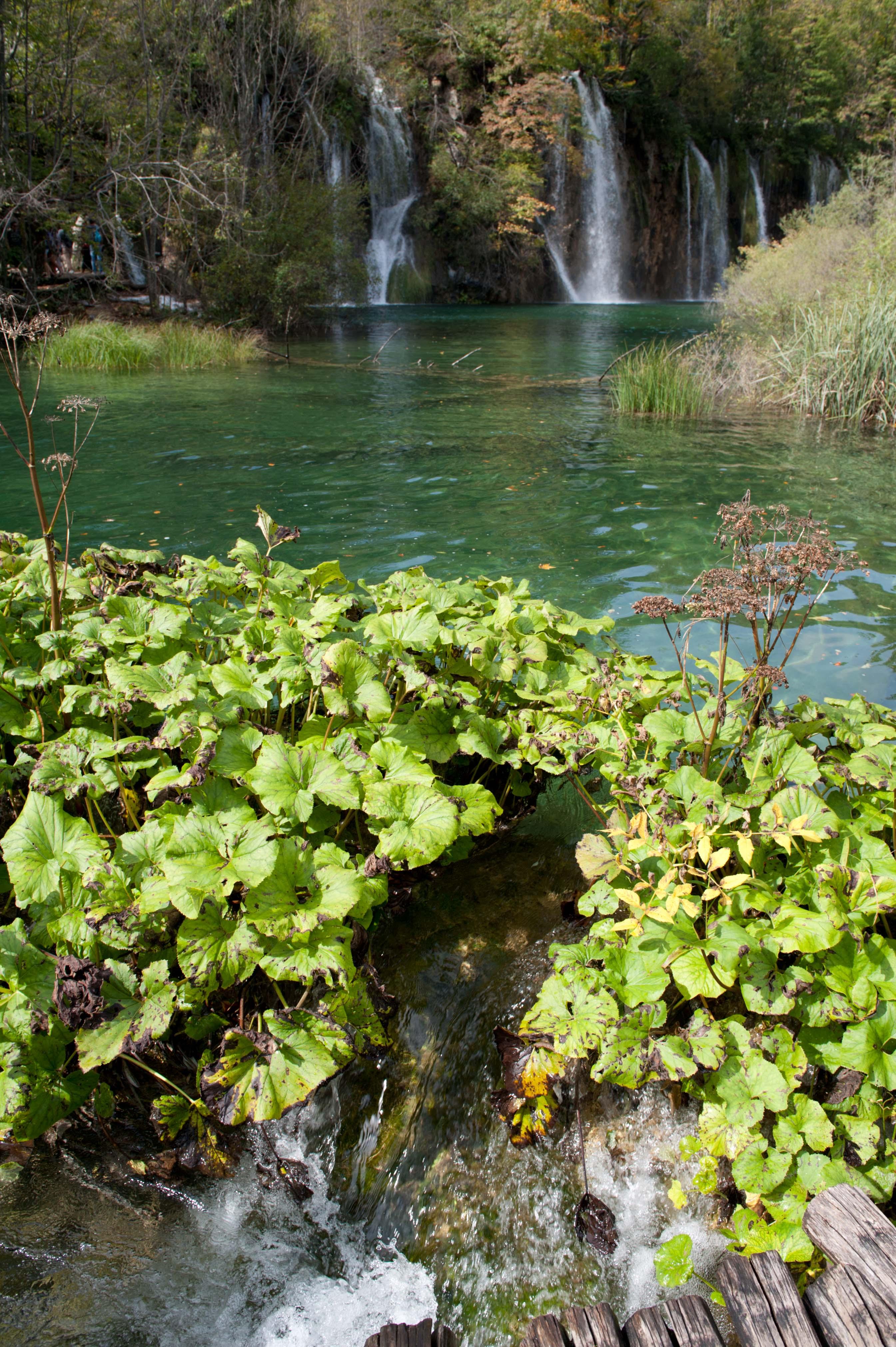0581-Parc national lacs de Plitvice (Lika-Croatie)