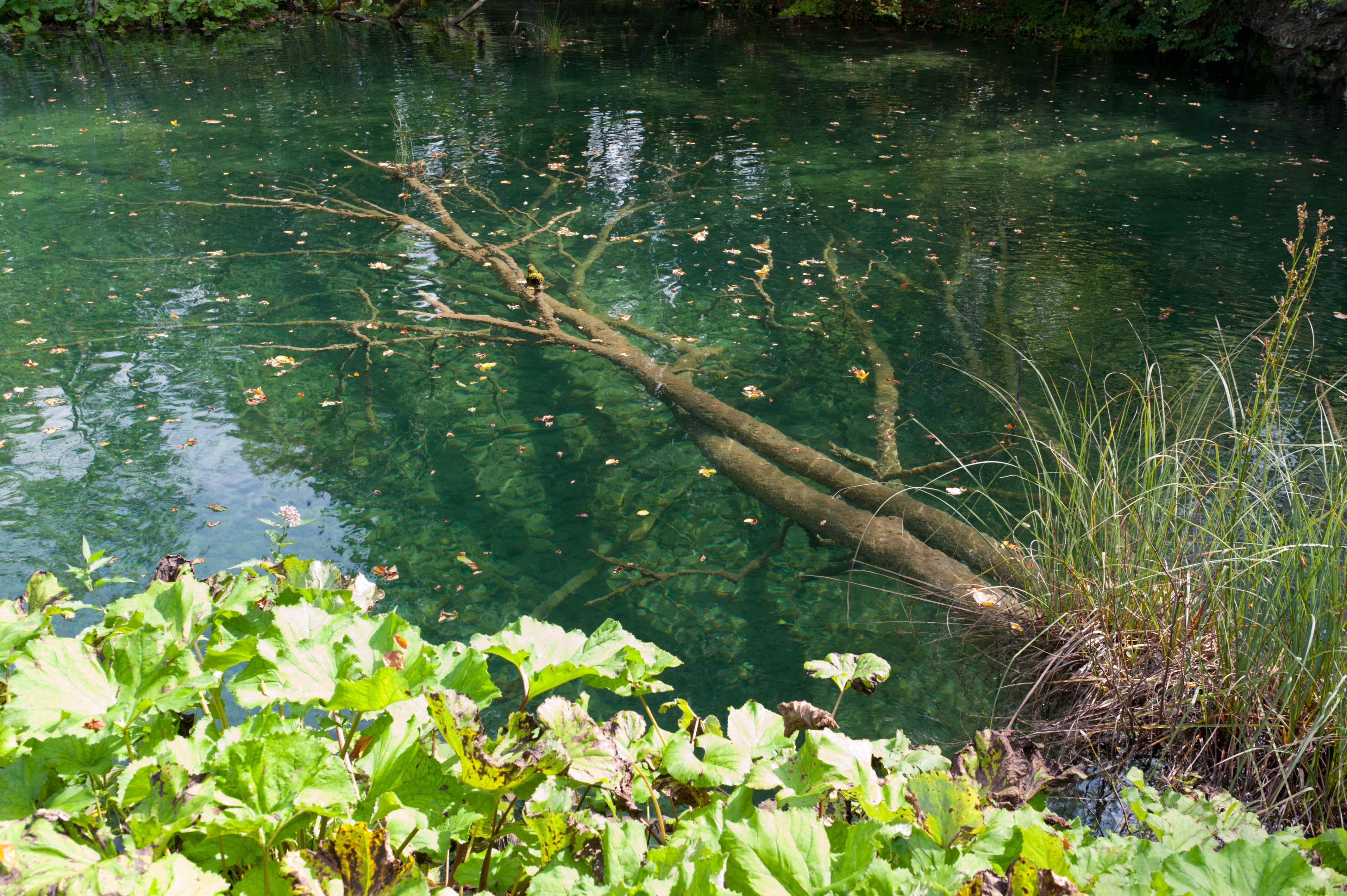 0591-Parc national lacs de Plitvice (Lika-Croatie)