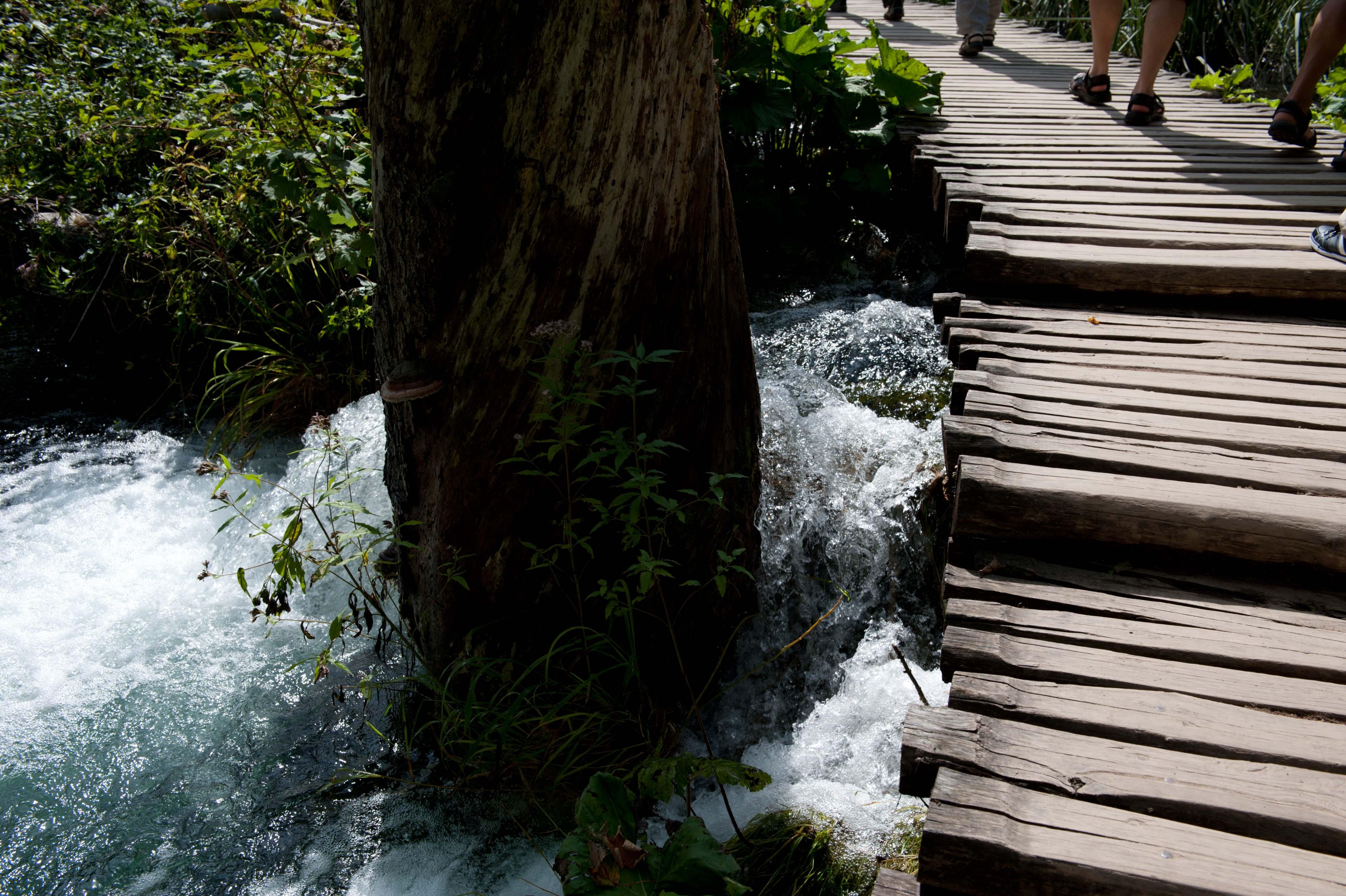 0593-Parc national lacs de Plitvice (Lika-Croatie)