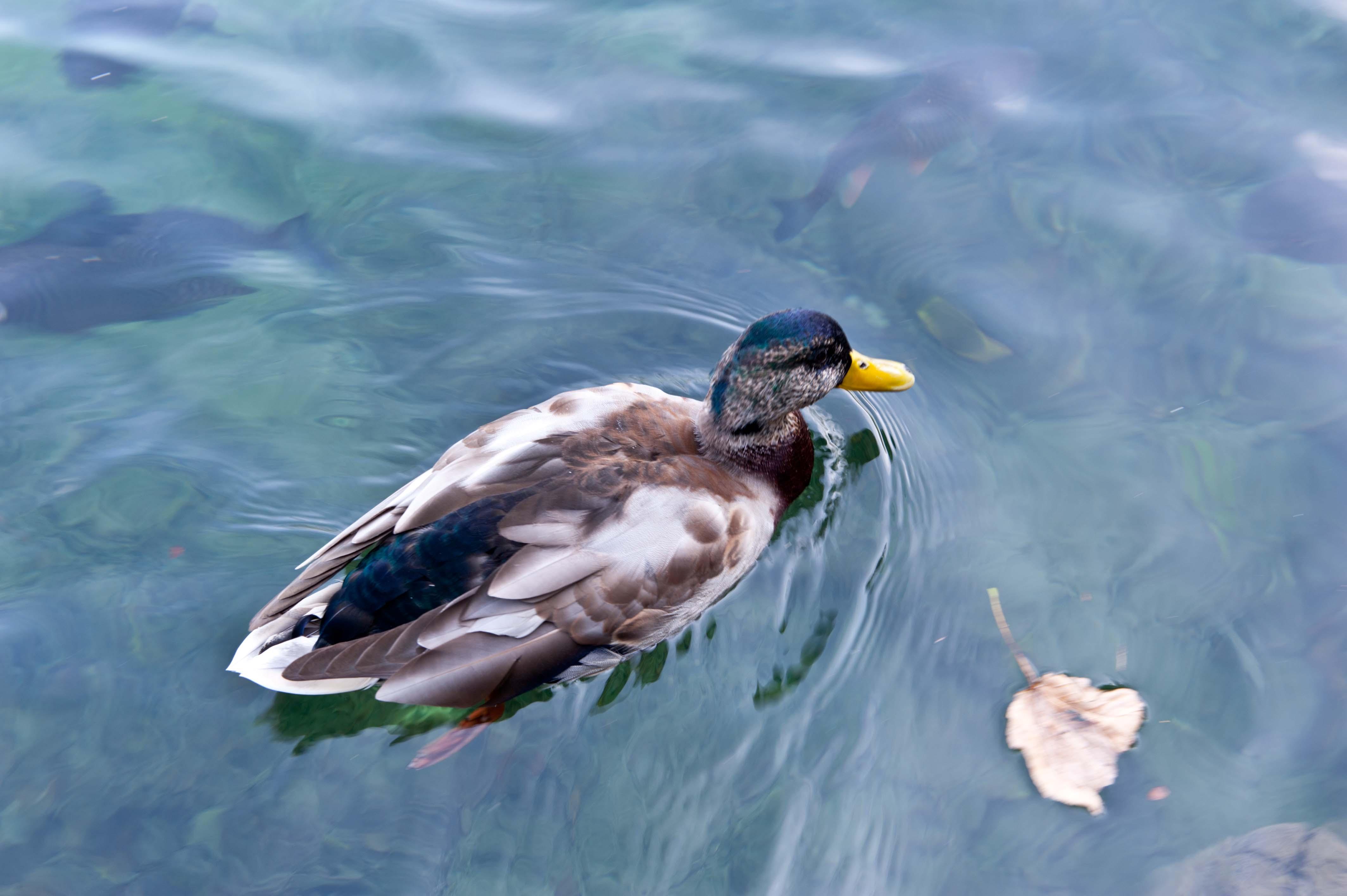 0596-Parc national lacs de Plitvice (Lika-Croatie)