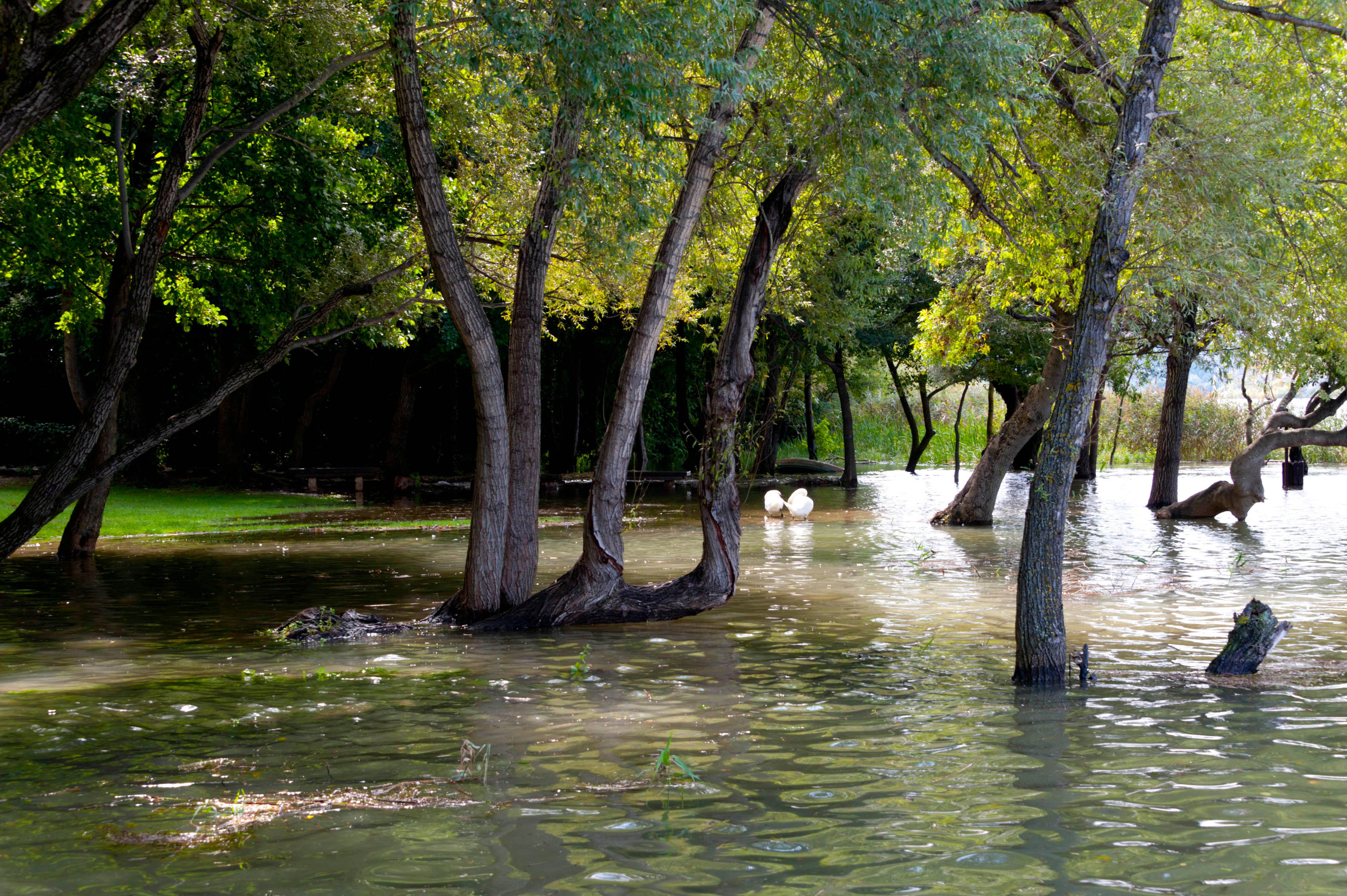 9495-Parc national Krka (Dalmatie du Nord)