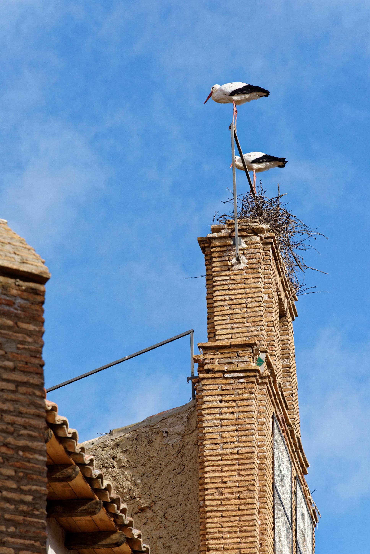 150111-NAVARRE Cascante (81)