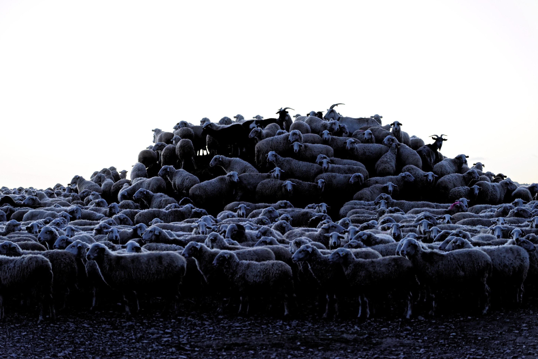 150112-Bardenas Plana de la negra - Piste de Portimayor (26)
