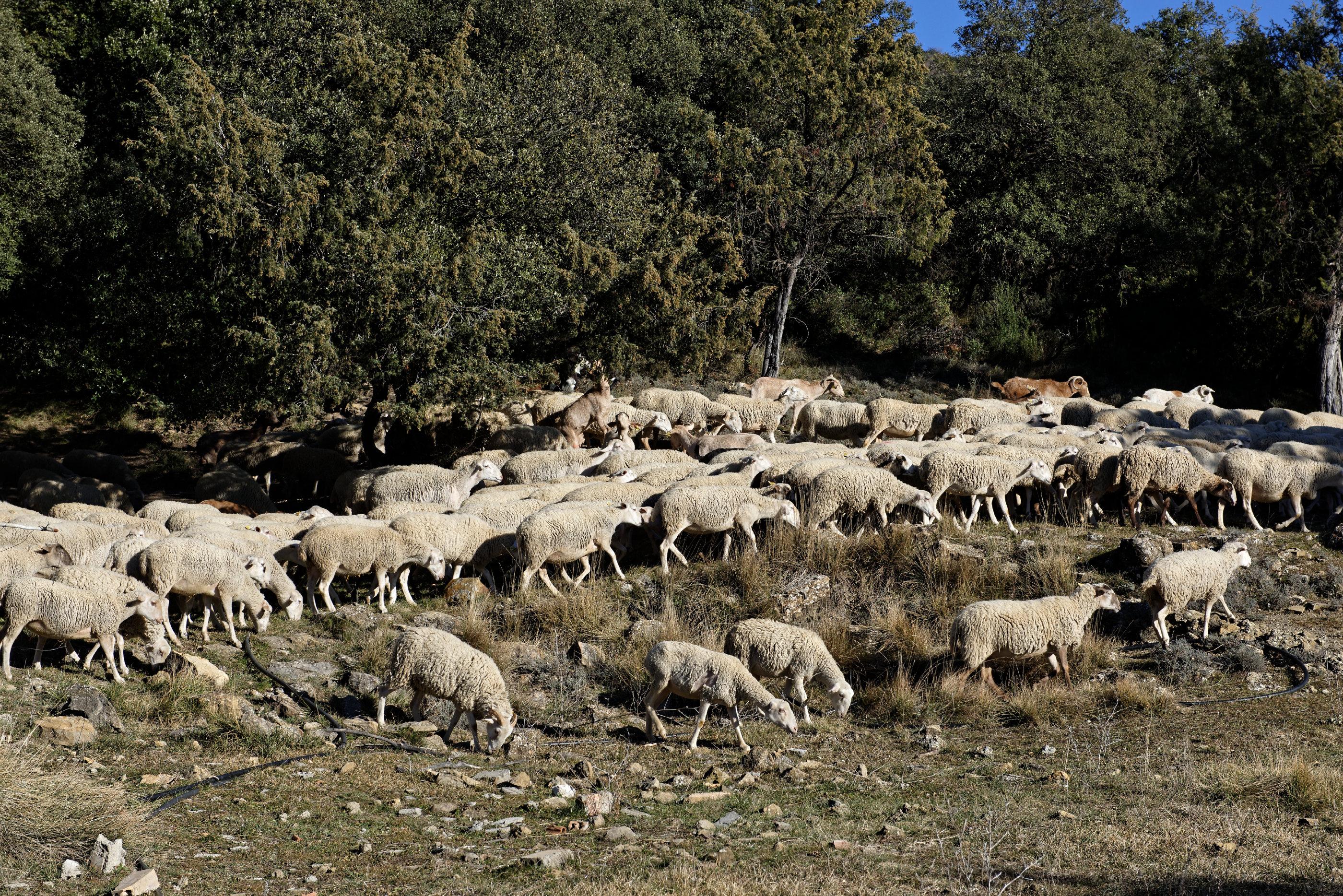 150125-Lacorz (Sobrarbe-La Fueva) (30)