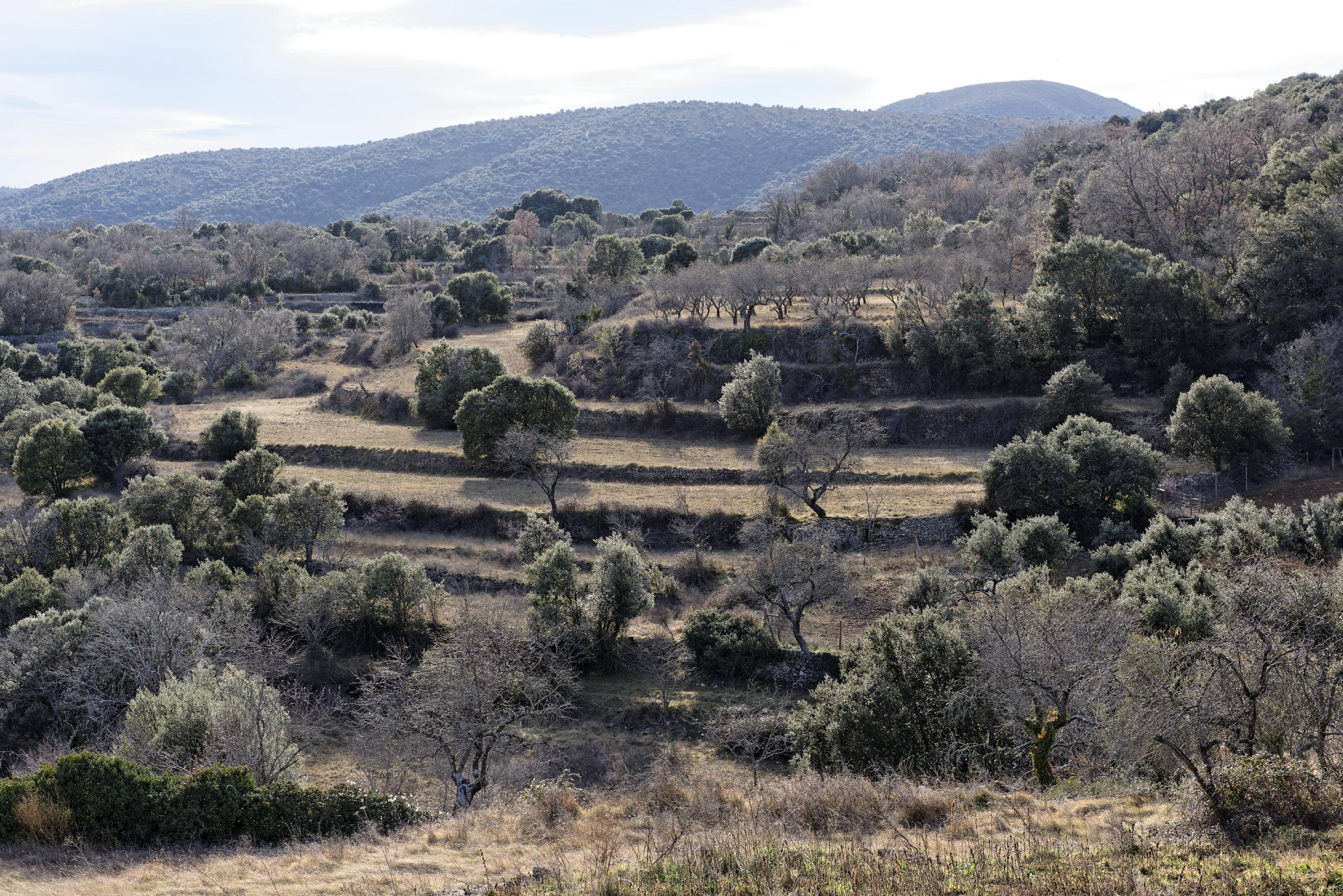 150127-Betorz (Biello Sobrarbe) (34)