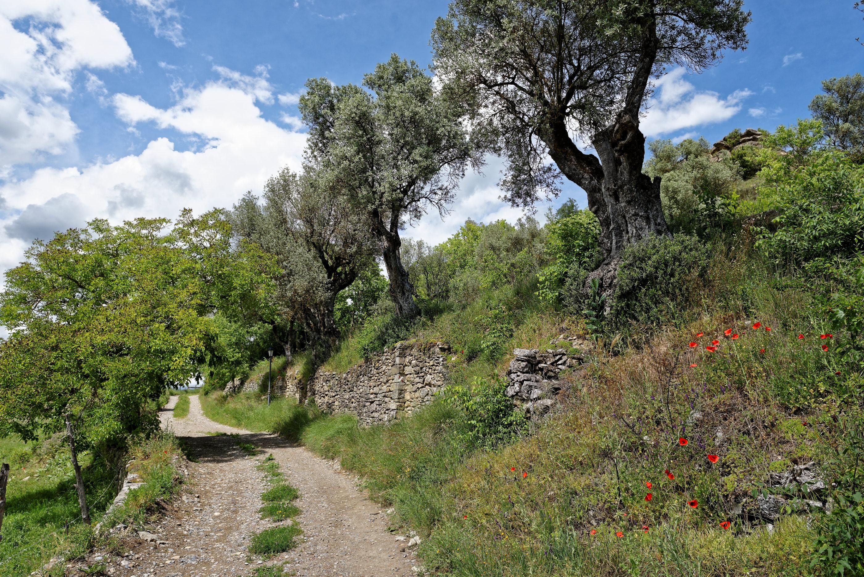 170514-Casteron de Sobrarbe (Sobrarbe) (13)