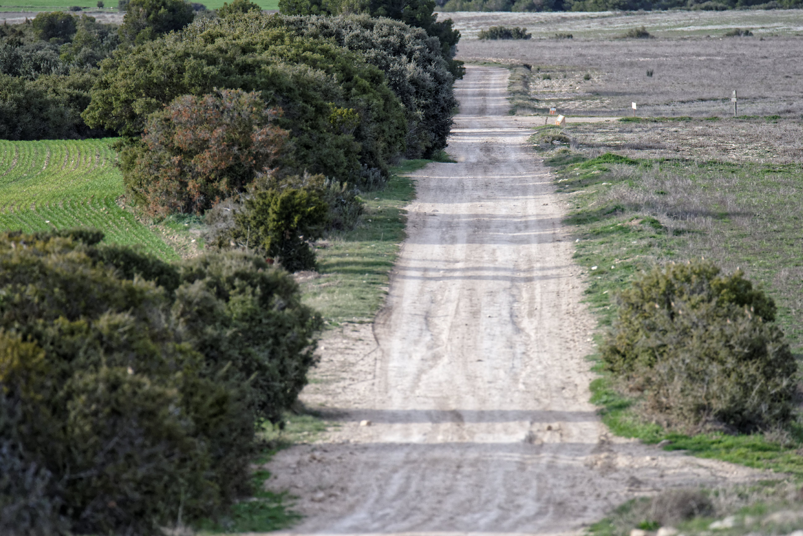 150309-Piste Sanctuaire Sanco Abarca-NA125 (Bardenas La negra) (46)