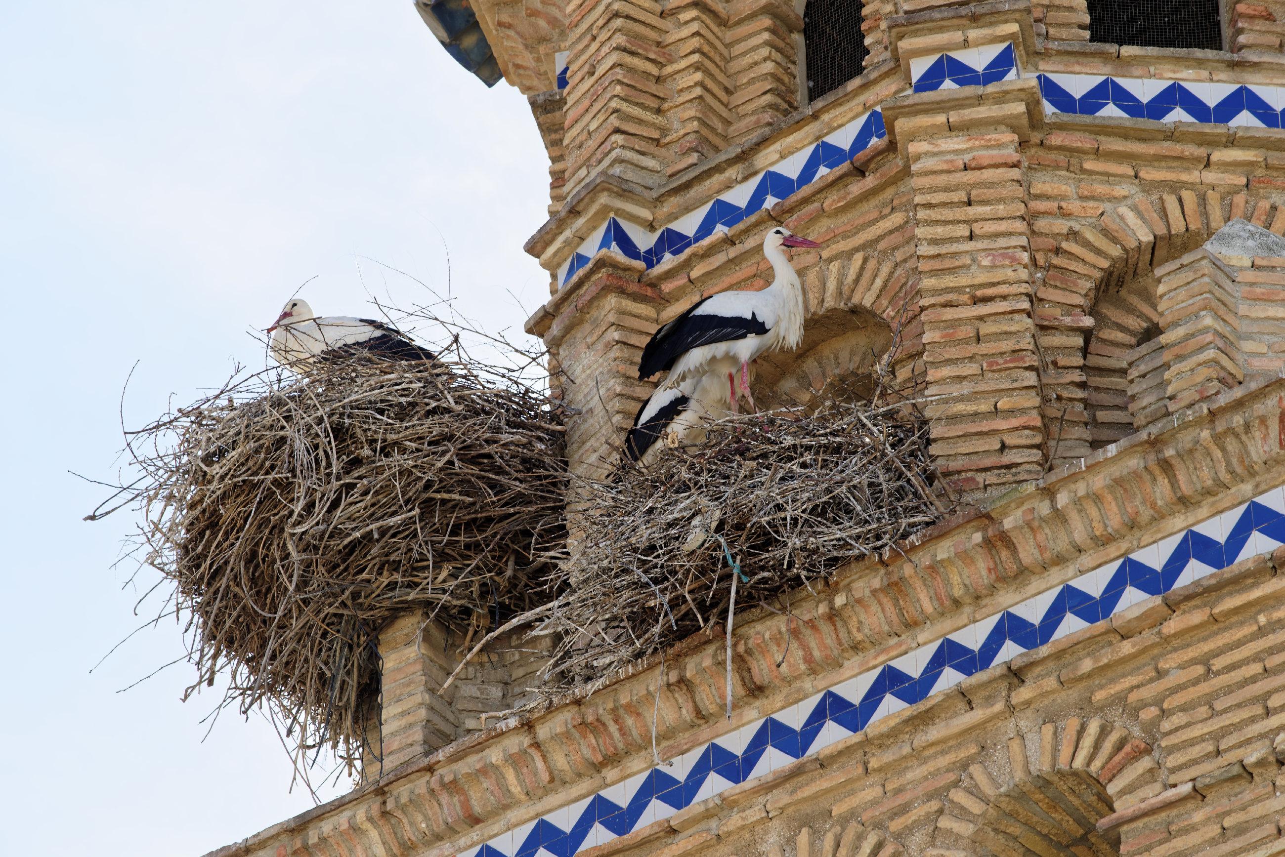150309-Tauste (Aragon-Cinco villas) (11)