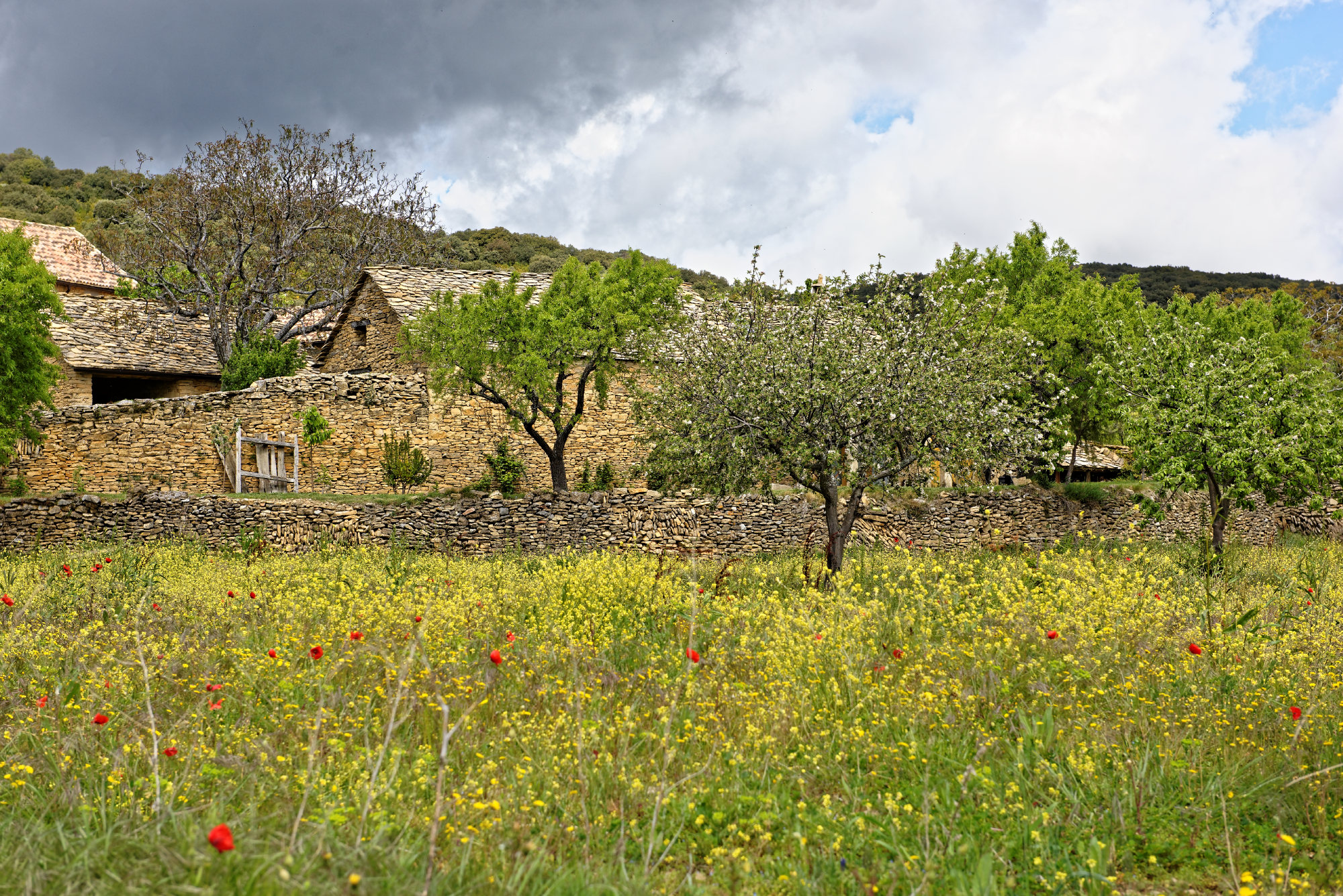 150429-Betorz (Sobrarbe) (20)