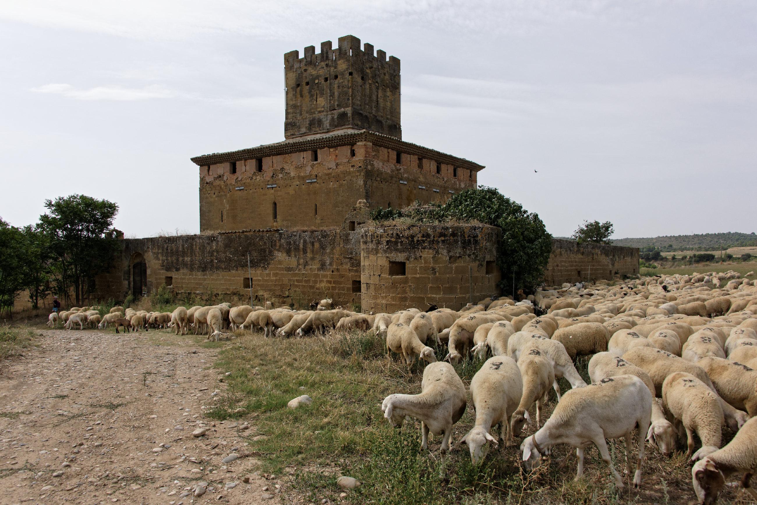 (7216) Castillo d'Ardisa