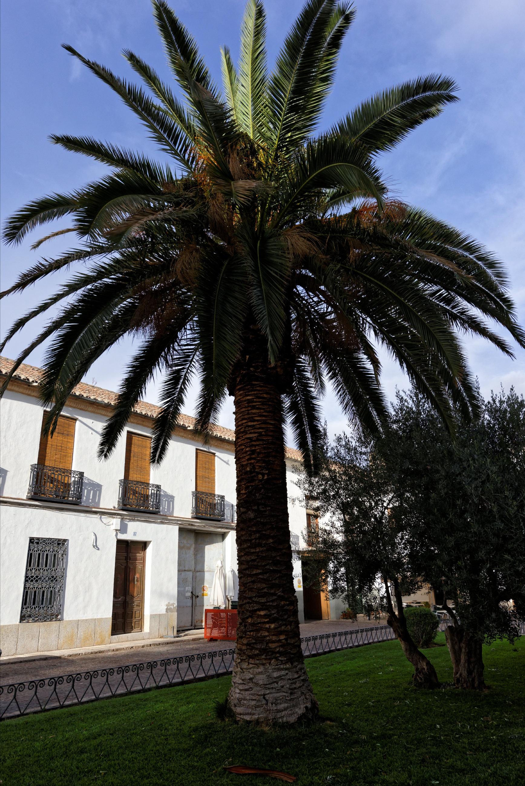 151102-Almagro (67)