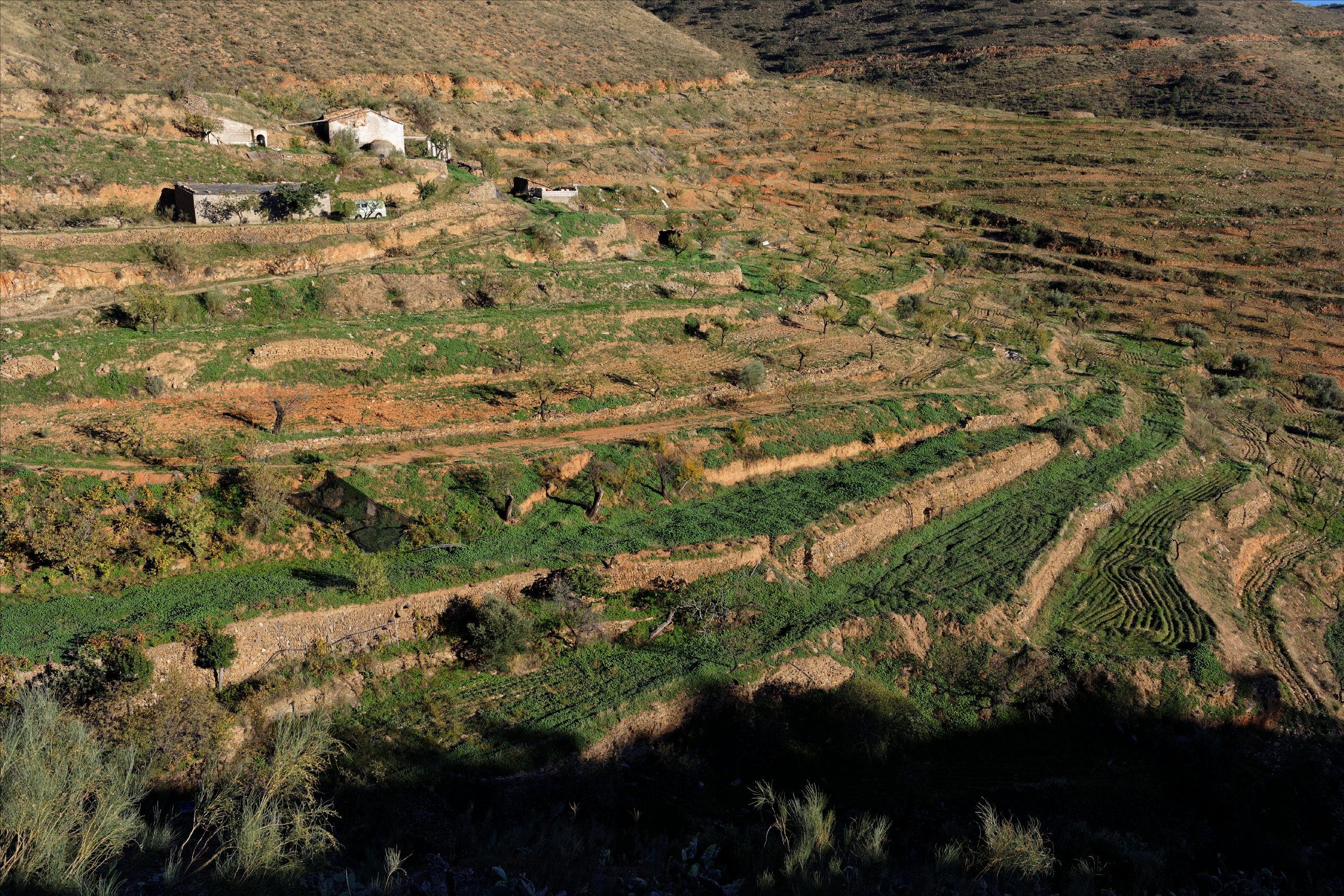 151107-Sierra de los Filabres (198)