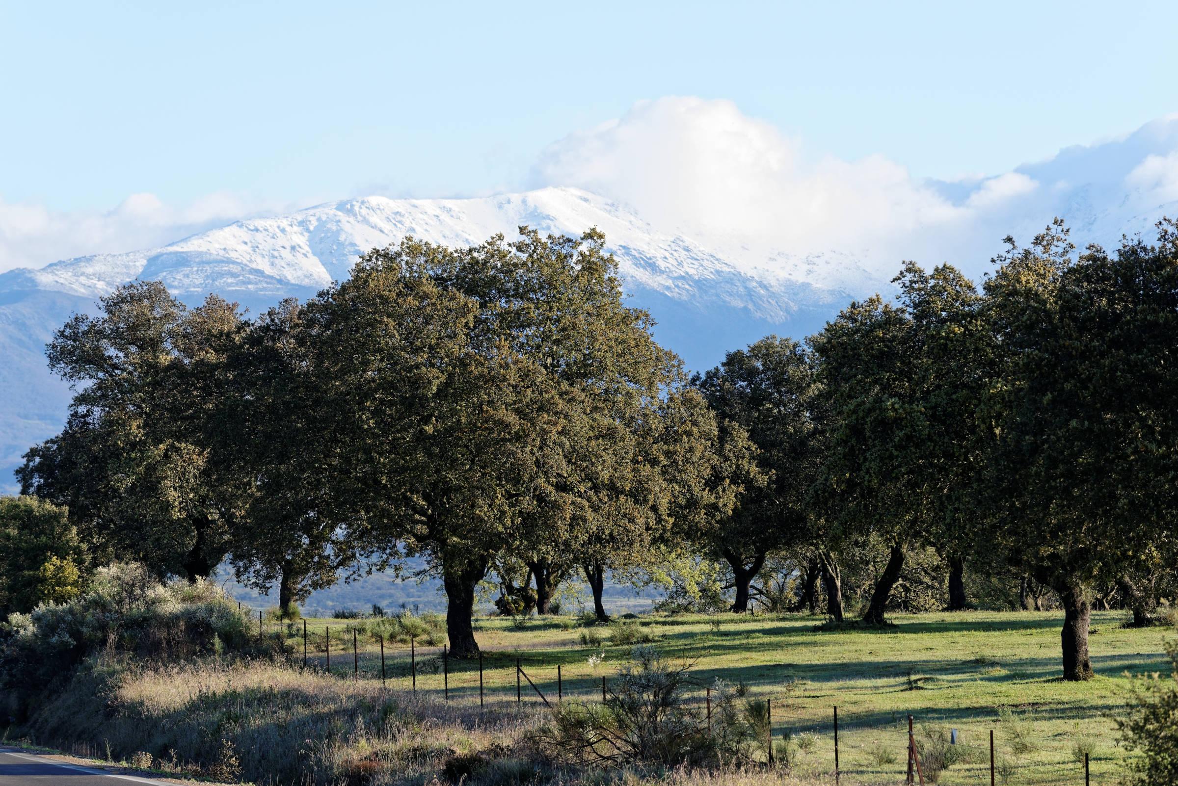 160405-parc national de monfrague (Estremadure) (100)