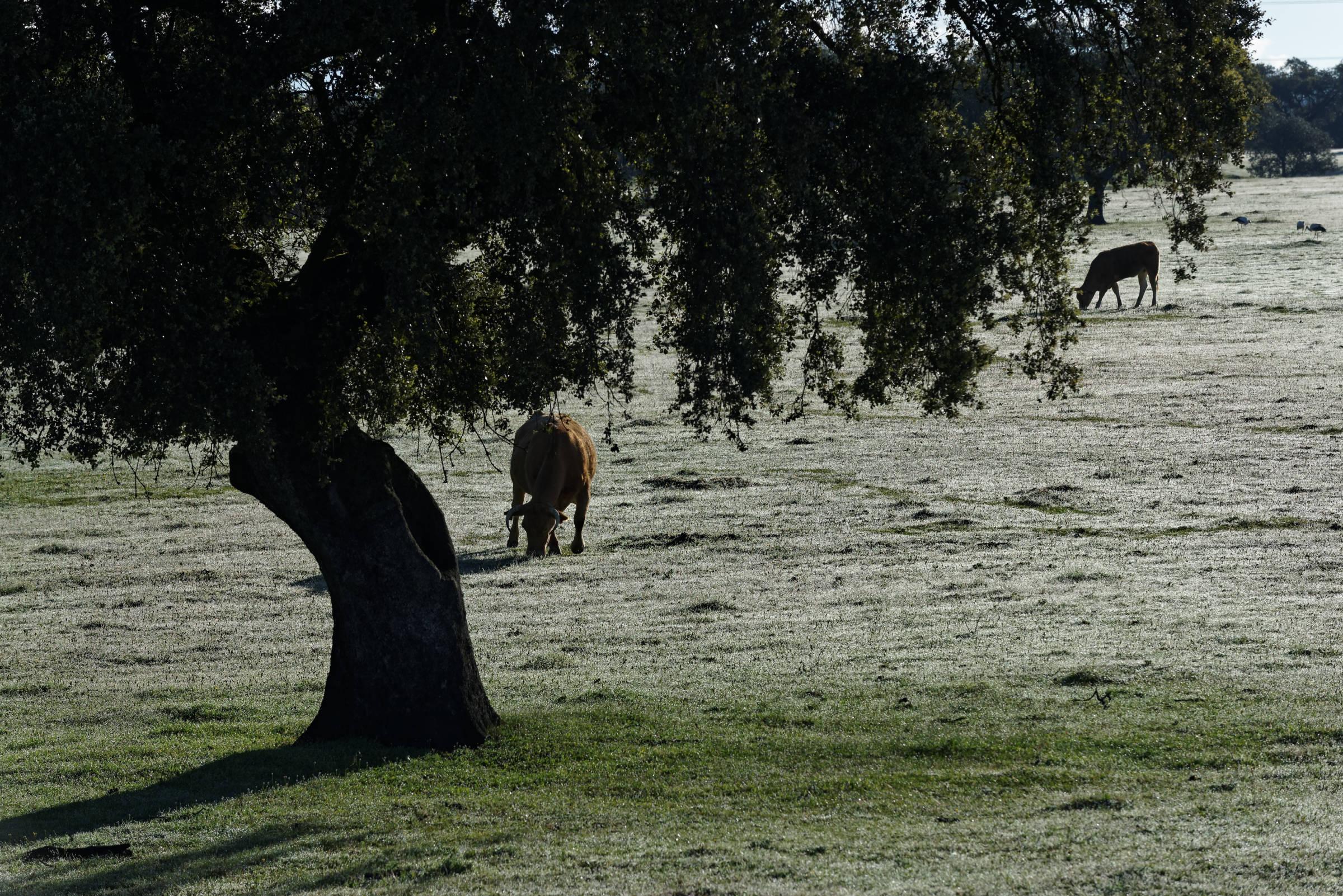 160405-parc national de monfrague (Estremadure) (102)
