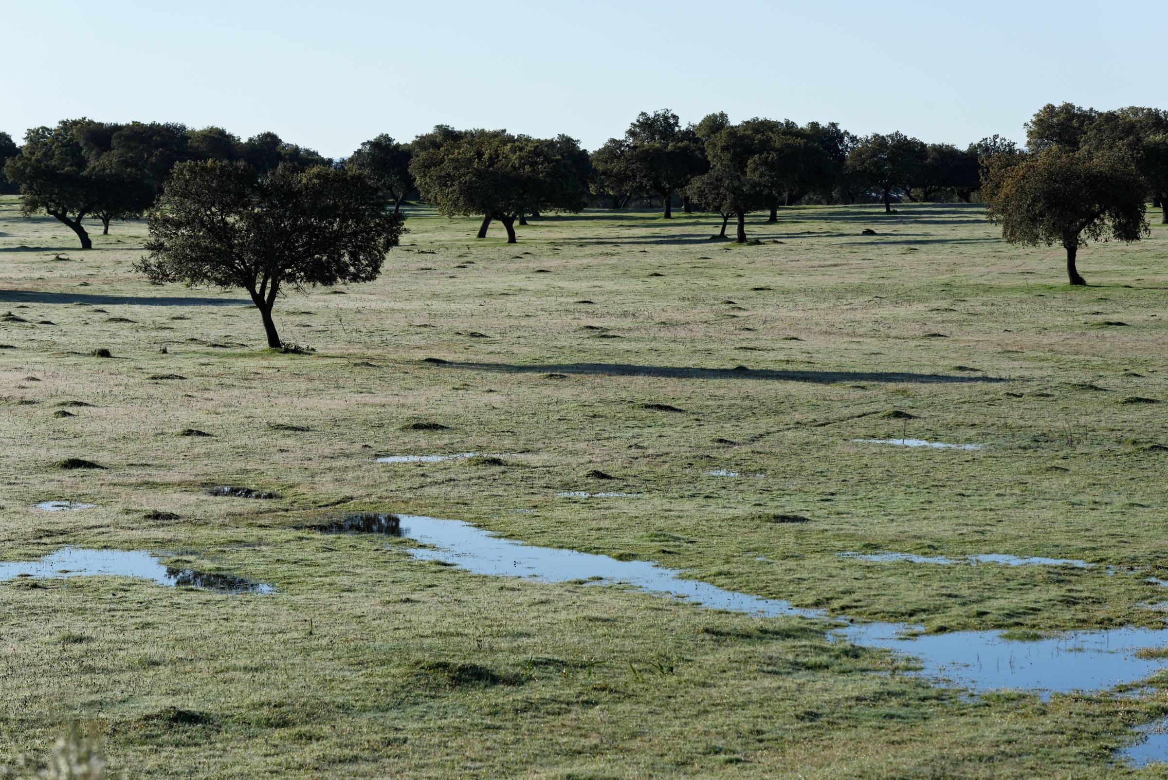 160405-parc national de monfrague (Estremadure) (103)