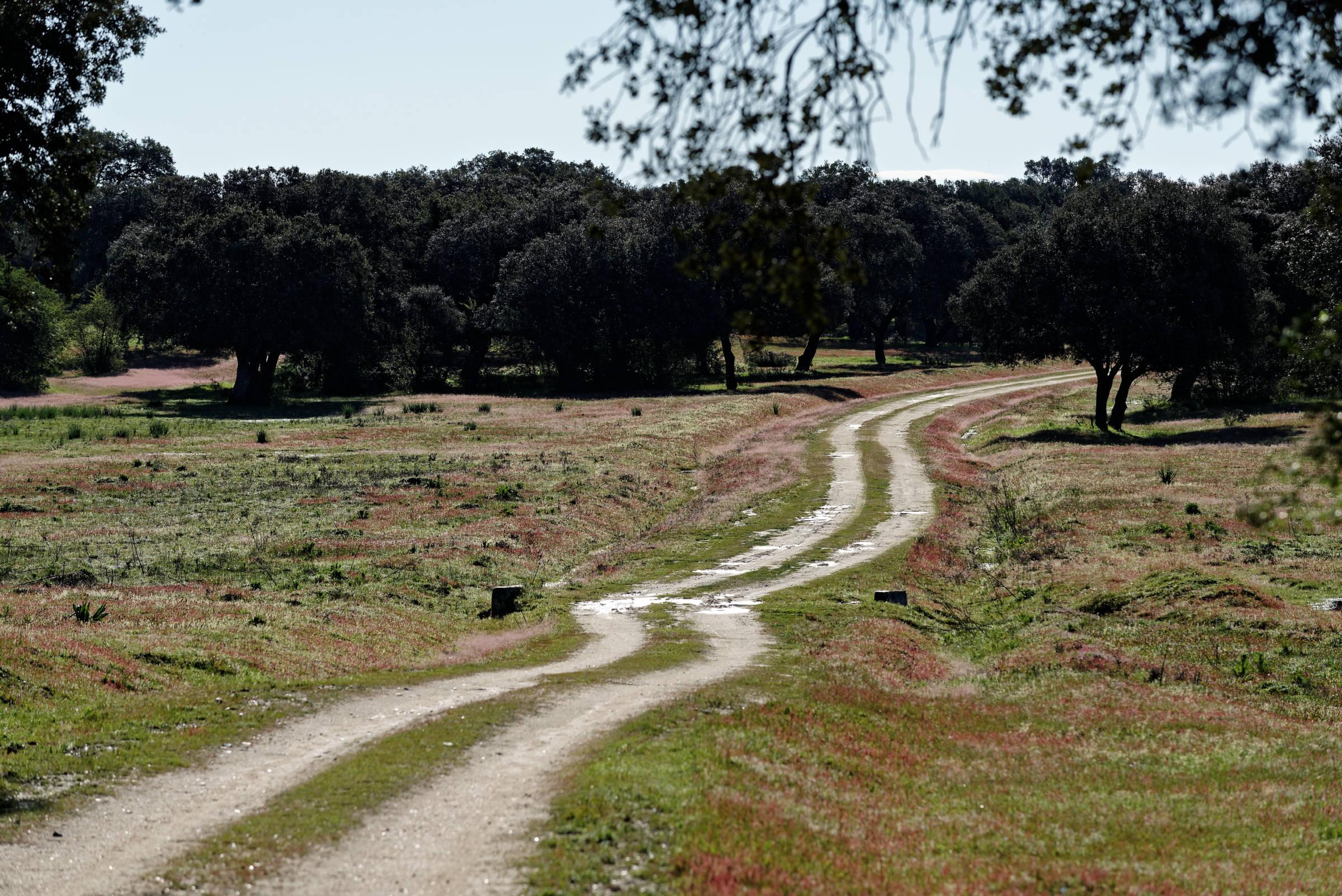 160405-parc national de monfrague (Estremadure) (110)